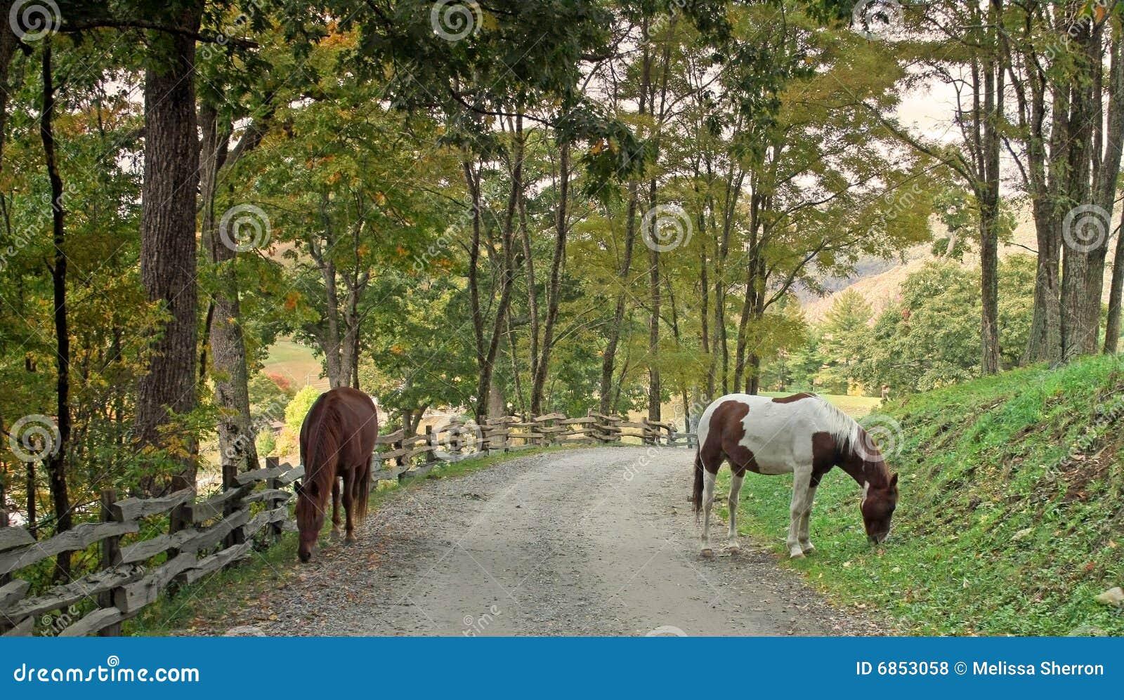 лошади в дороге