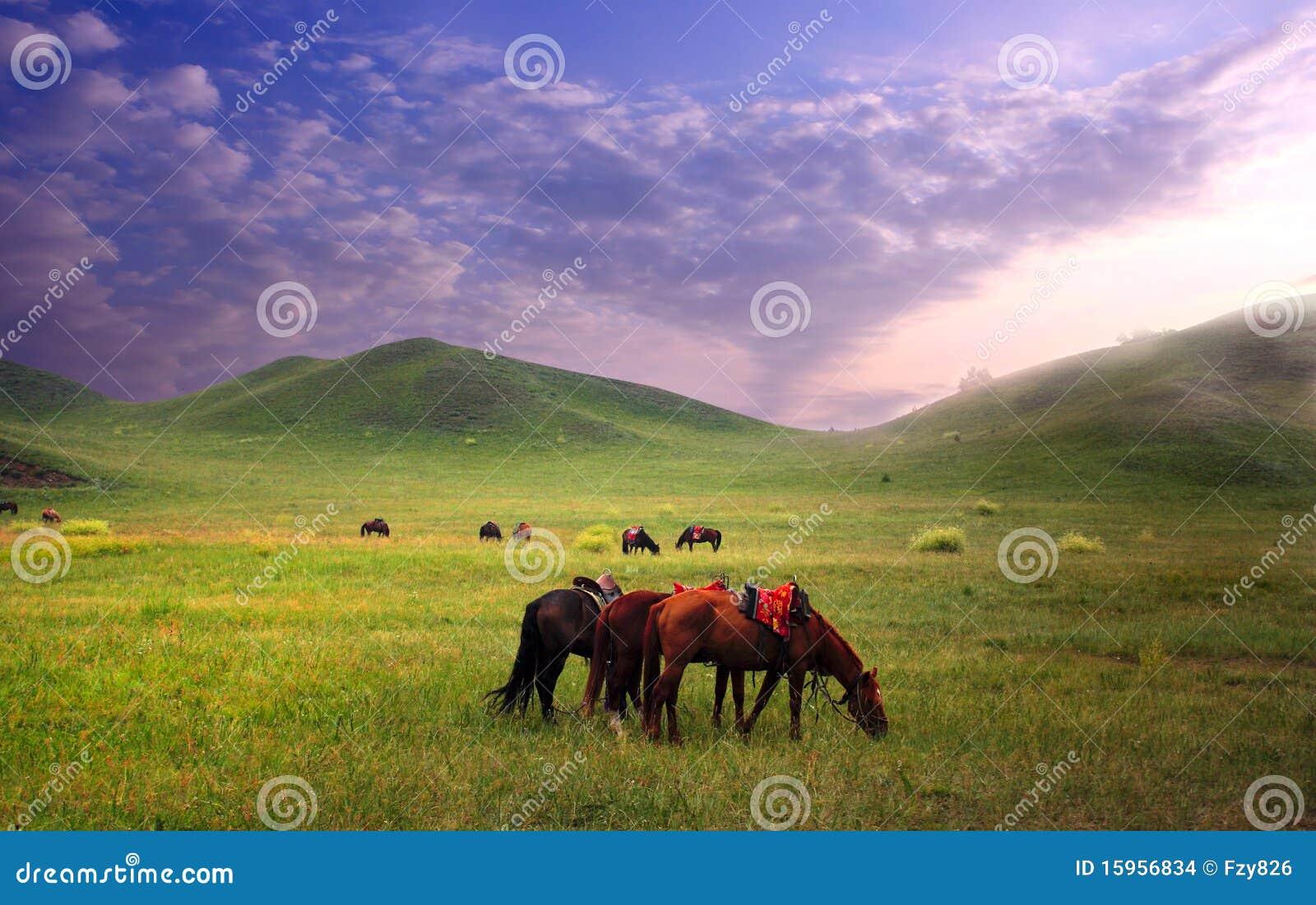 лошади злаковика