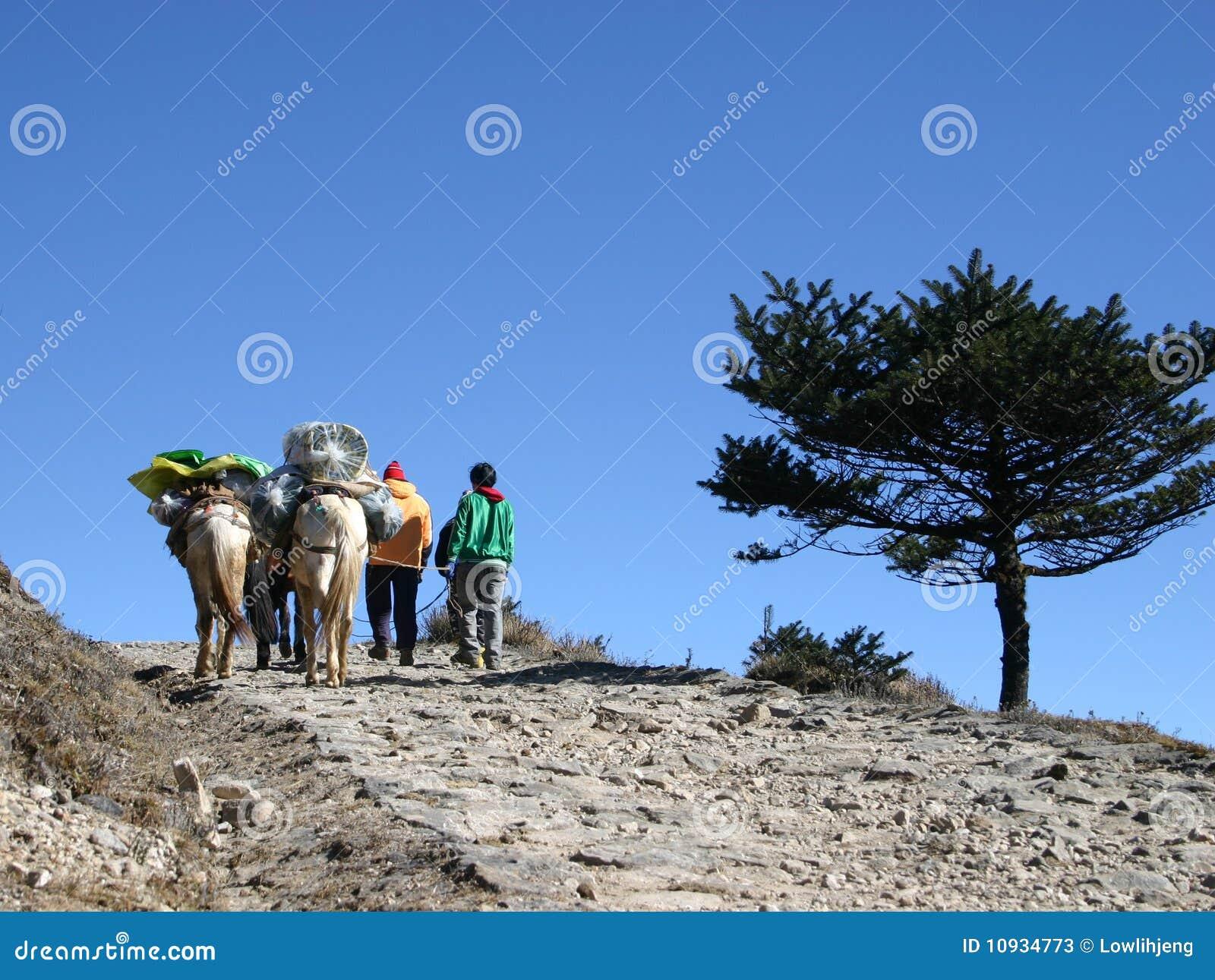 лошади Индия наездников himalayans северо-восточная