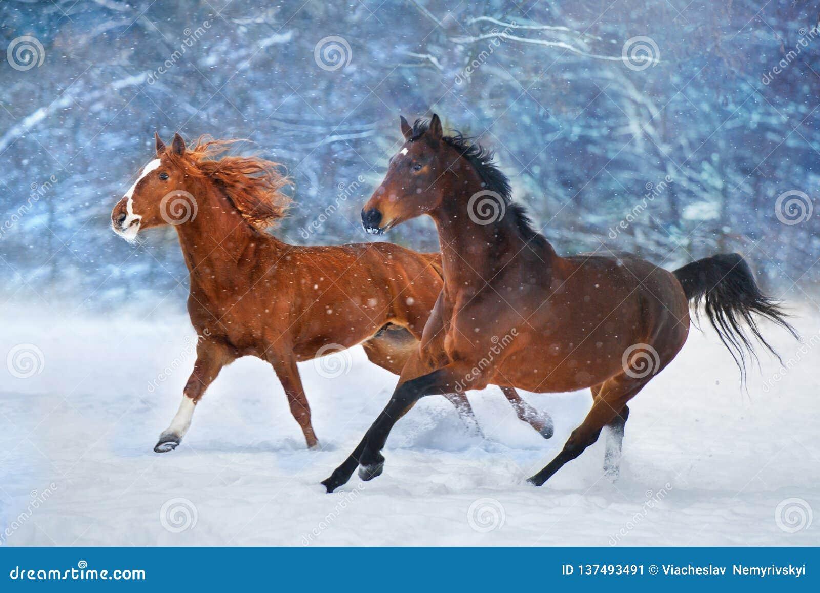 Лошади, который побежали в снеге