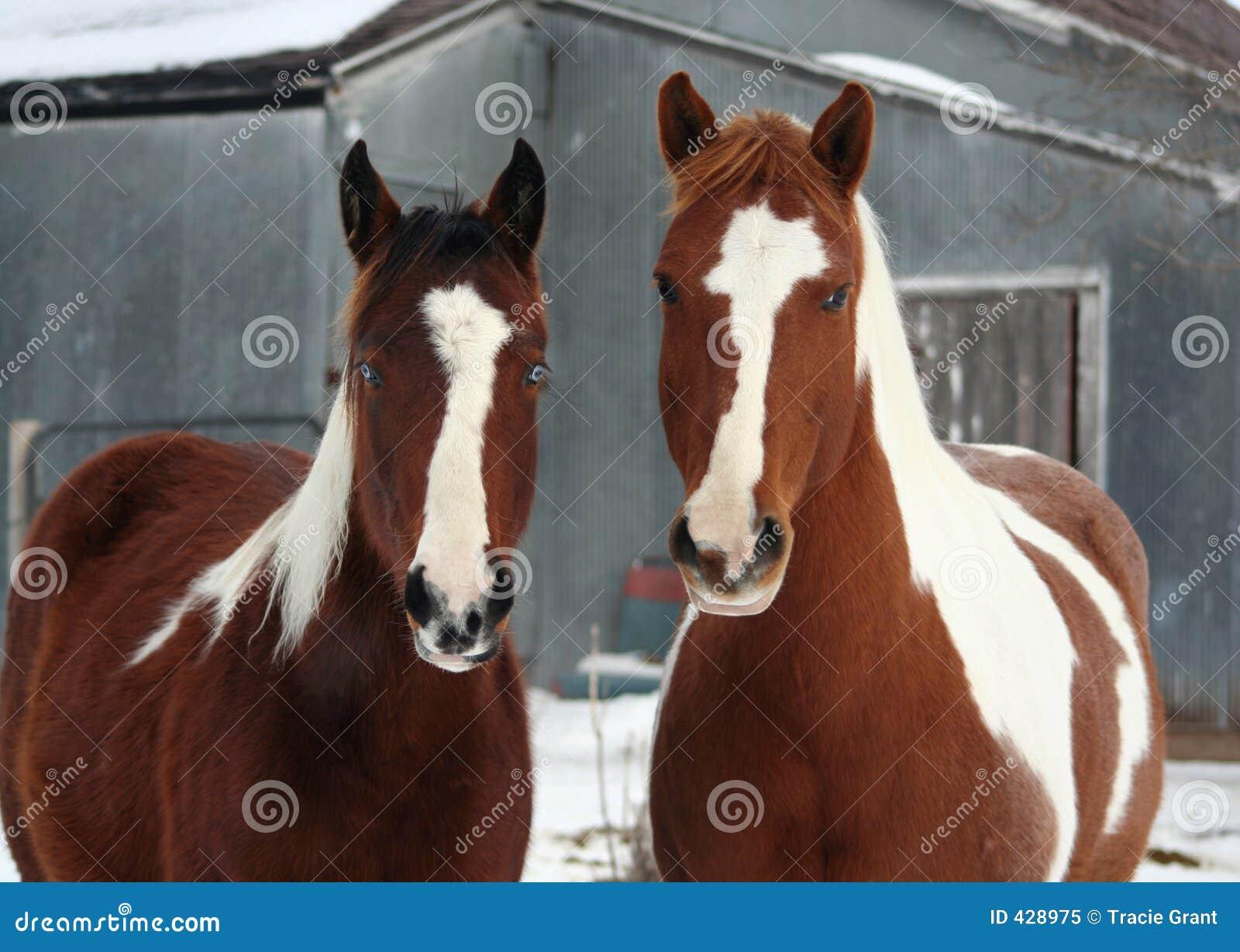лошади фермы