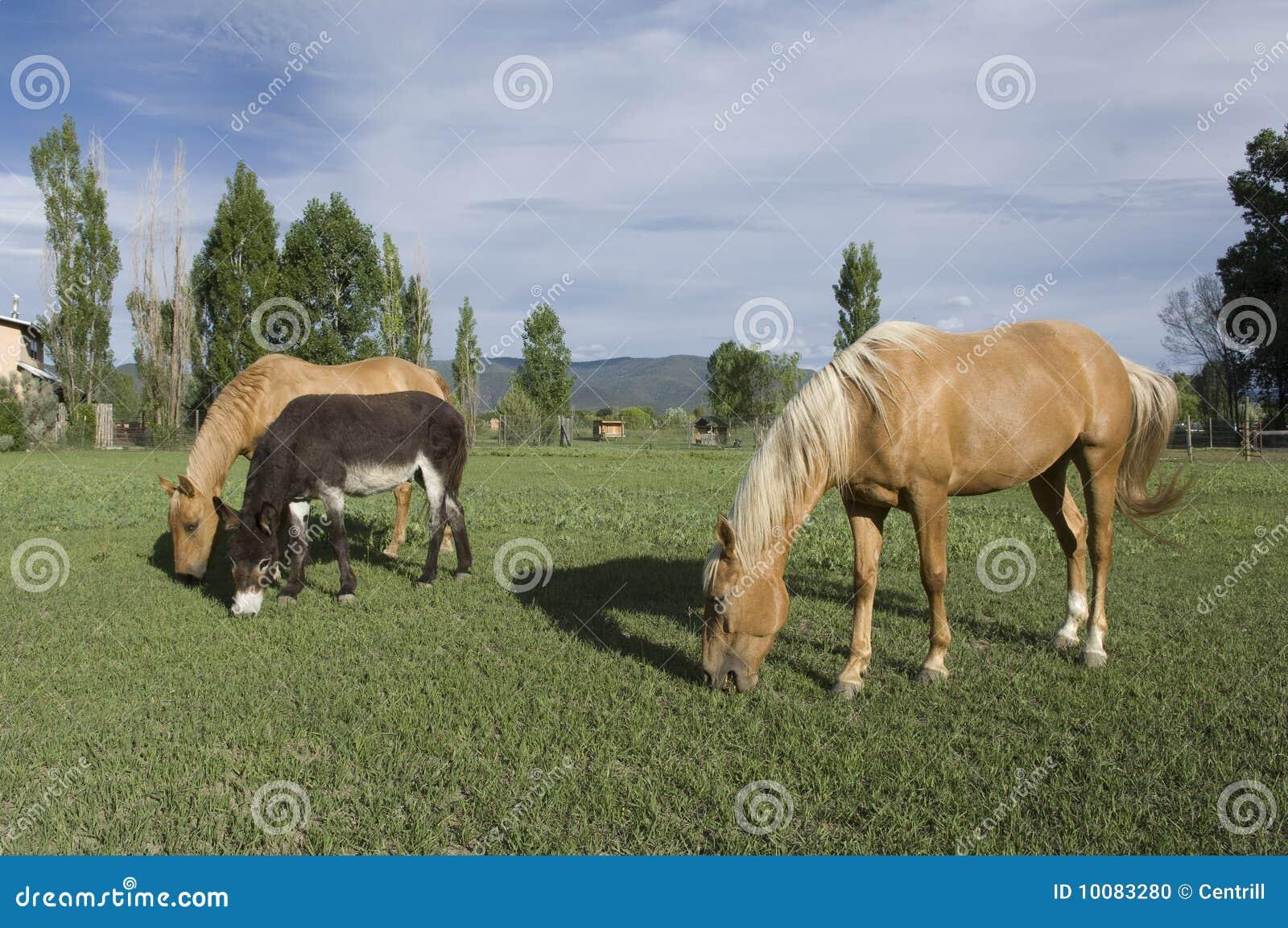 лошади 2 осла