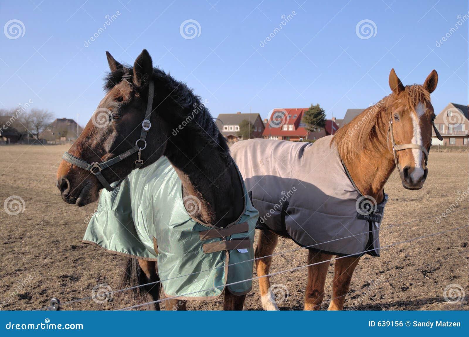 Download лошади 2 стоковое фото. изображение насчитывающей бобра - 639156