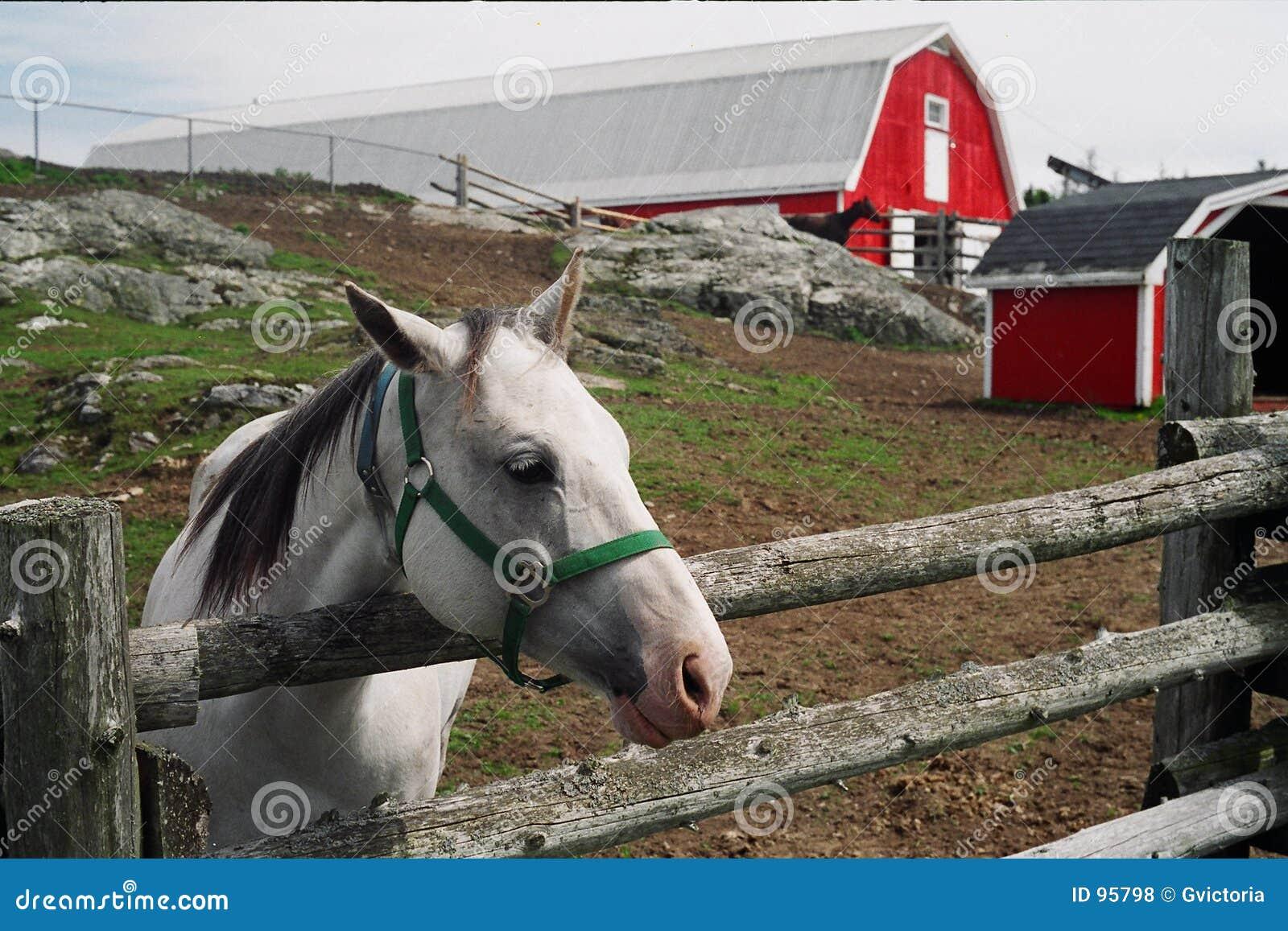 лошадь амбара
