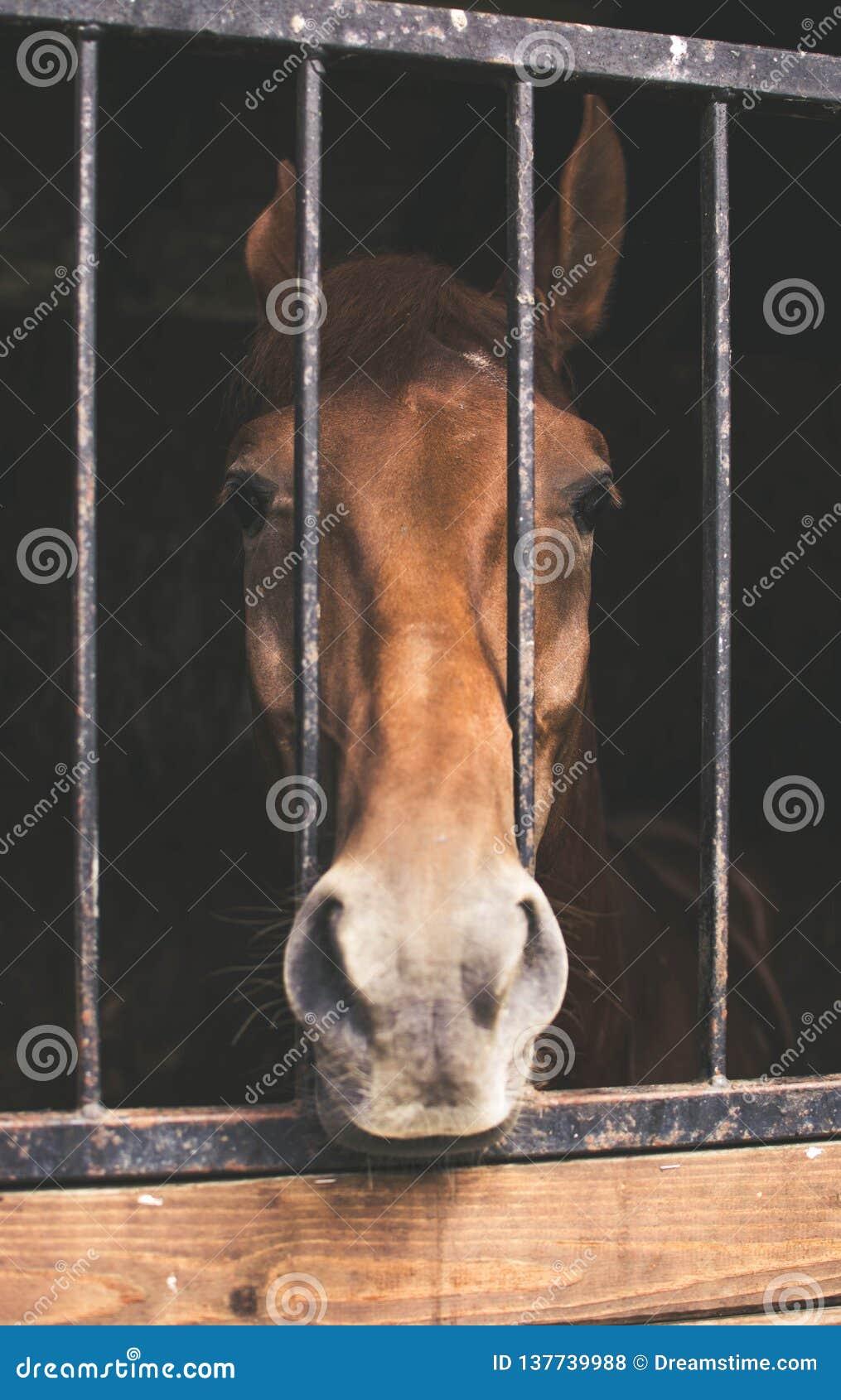 Лошадь Брауна за решеткой
