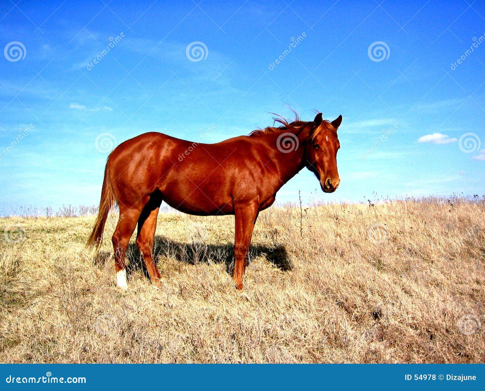 лошадь вершины холма
