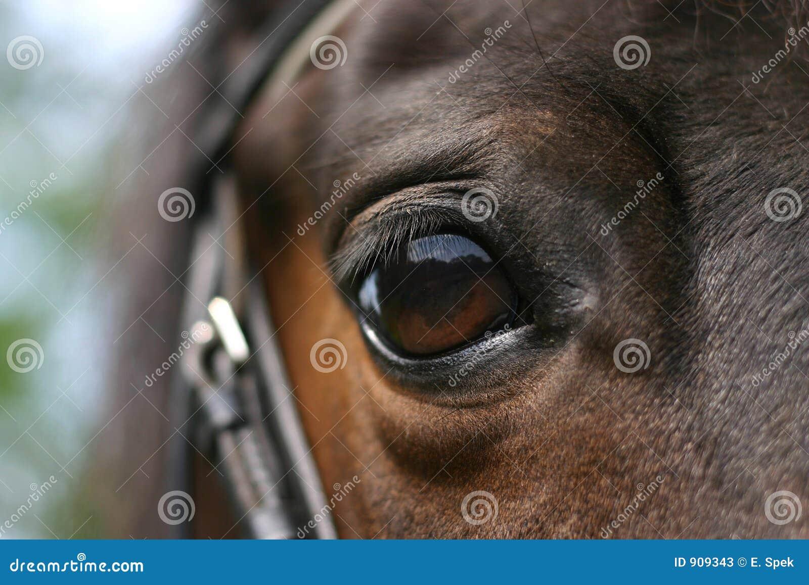 лошадь глаза
