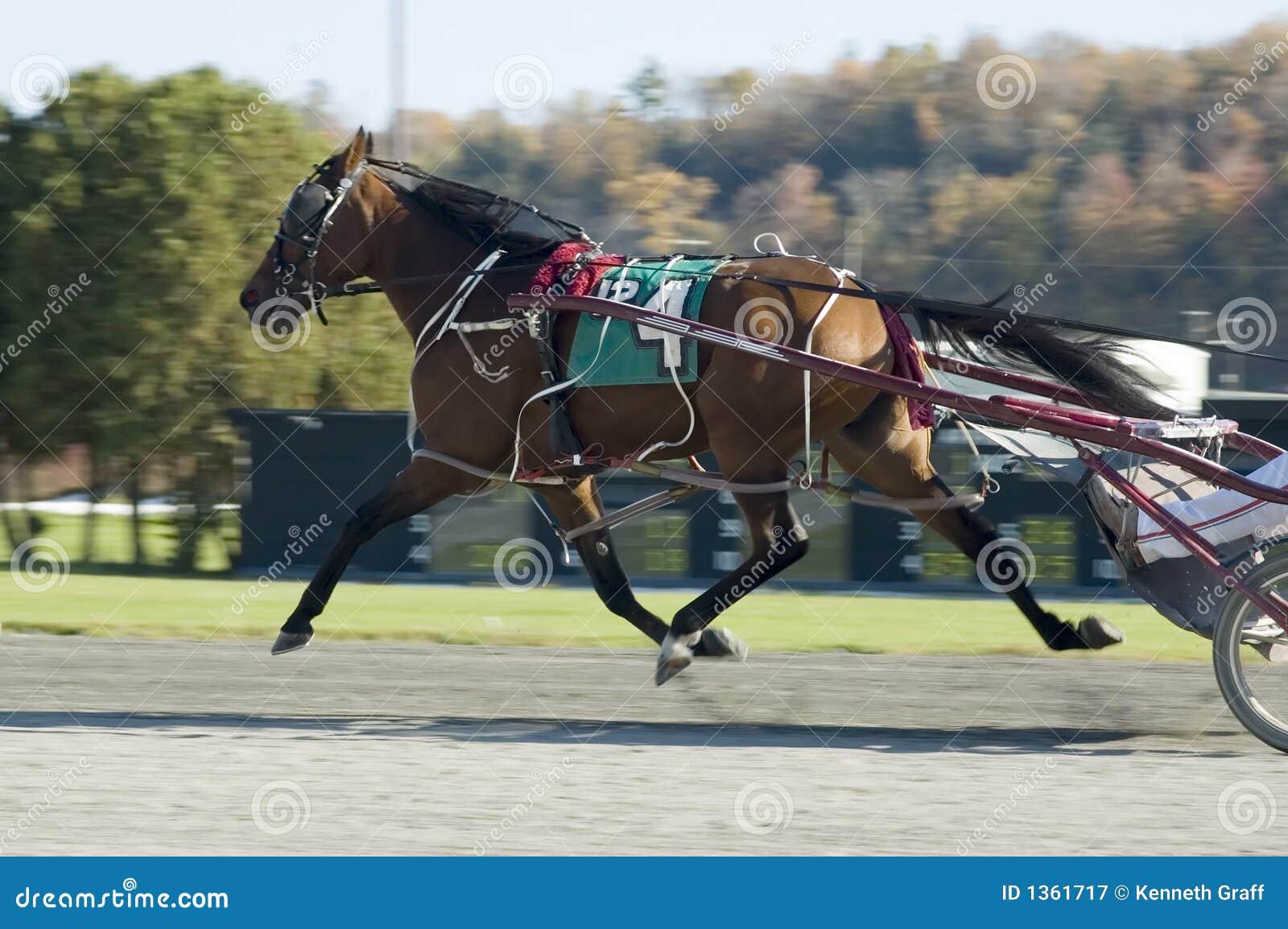 лошадь летания 2