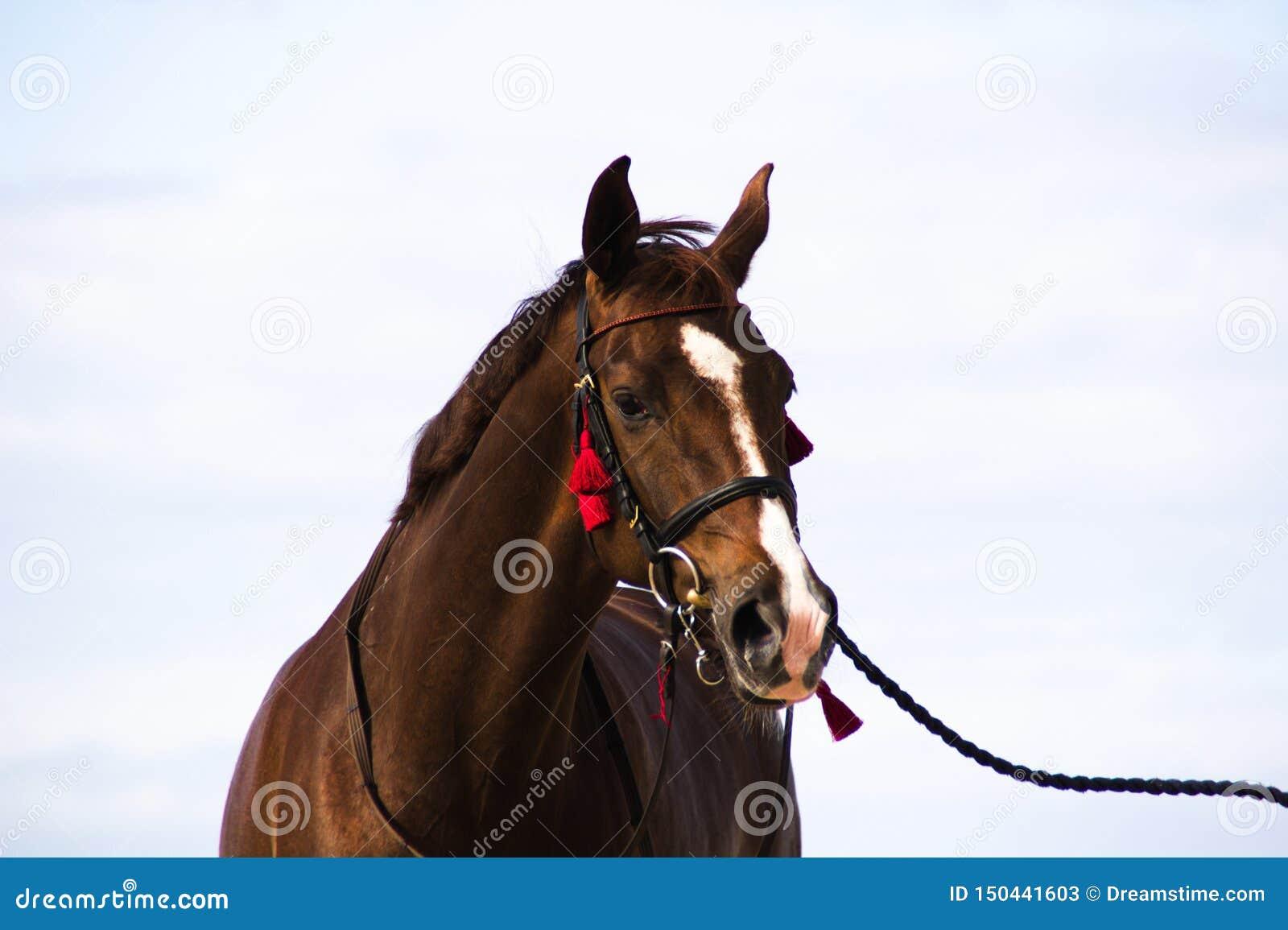 Лошадь на запачканной предпосылке