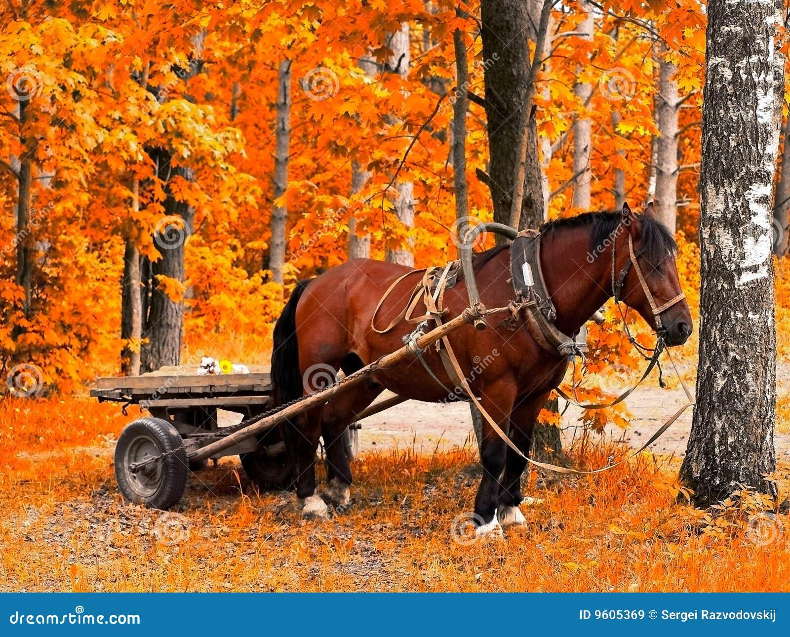 лошадь осени золотистая