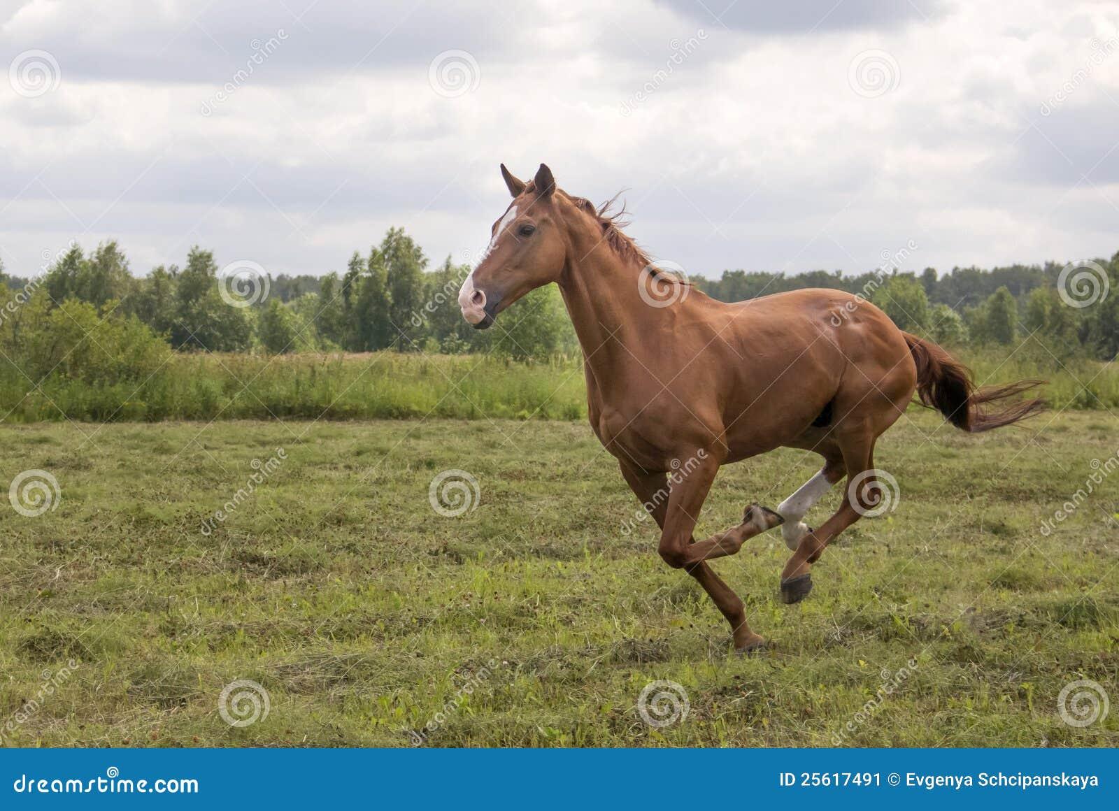 лошадь поля