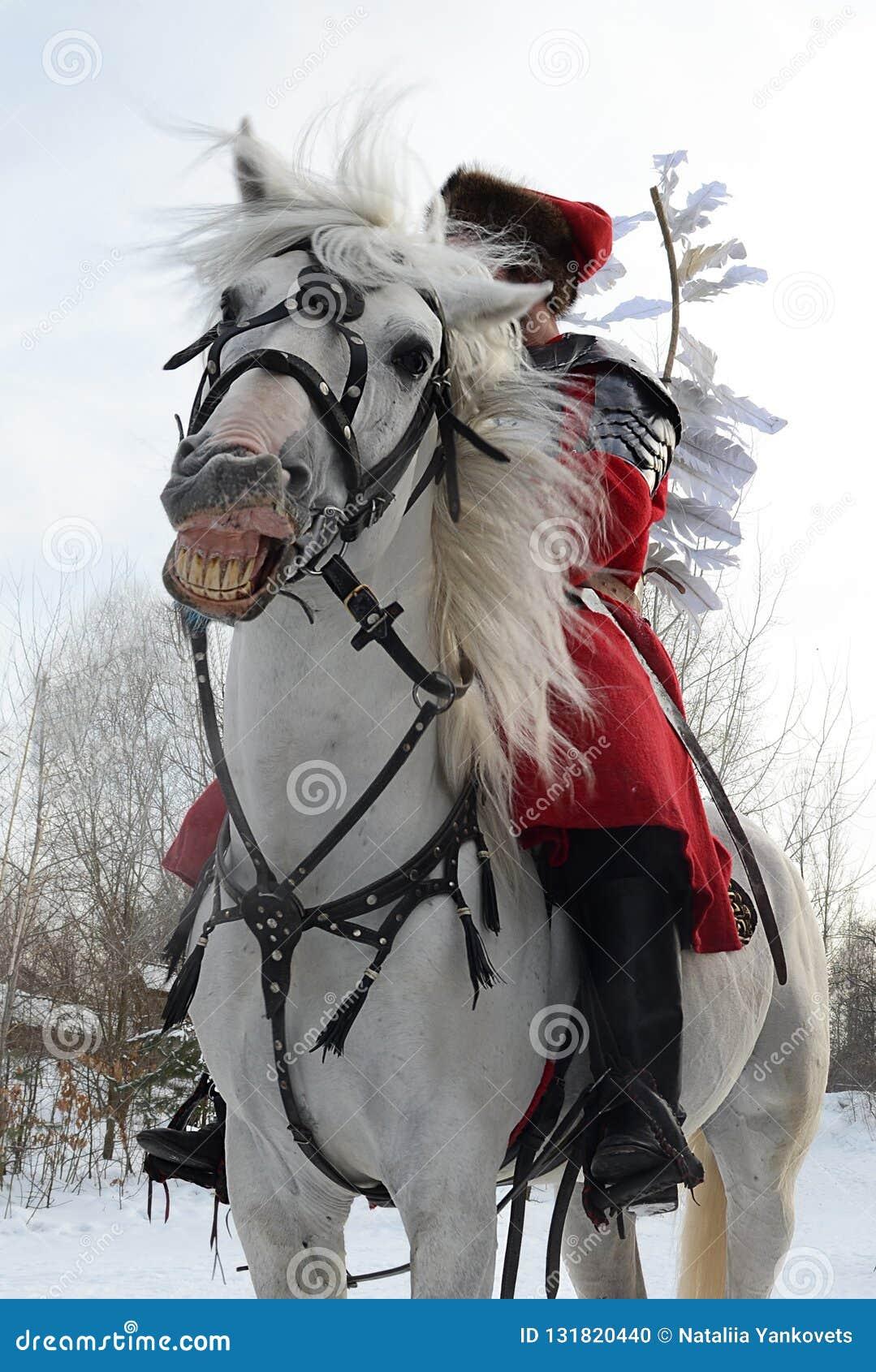 Лошадь потехи сумасшедшая белая в проверке на которой всадник сидит в красном jetnokostjume стоит между сельской местностью зимы
