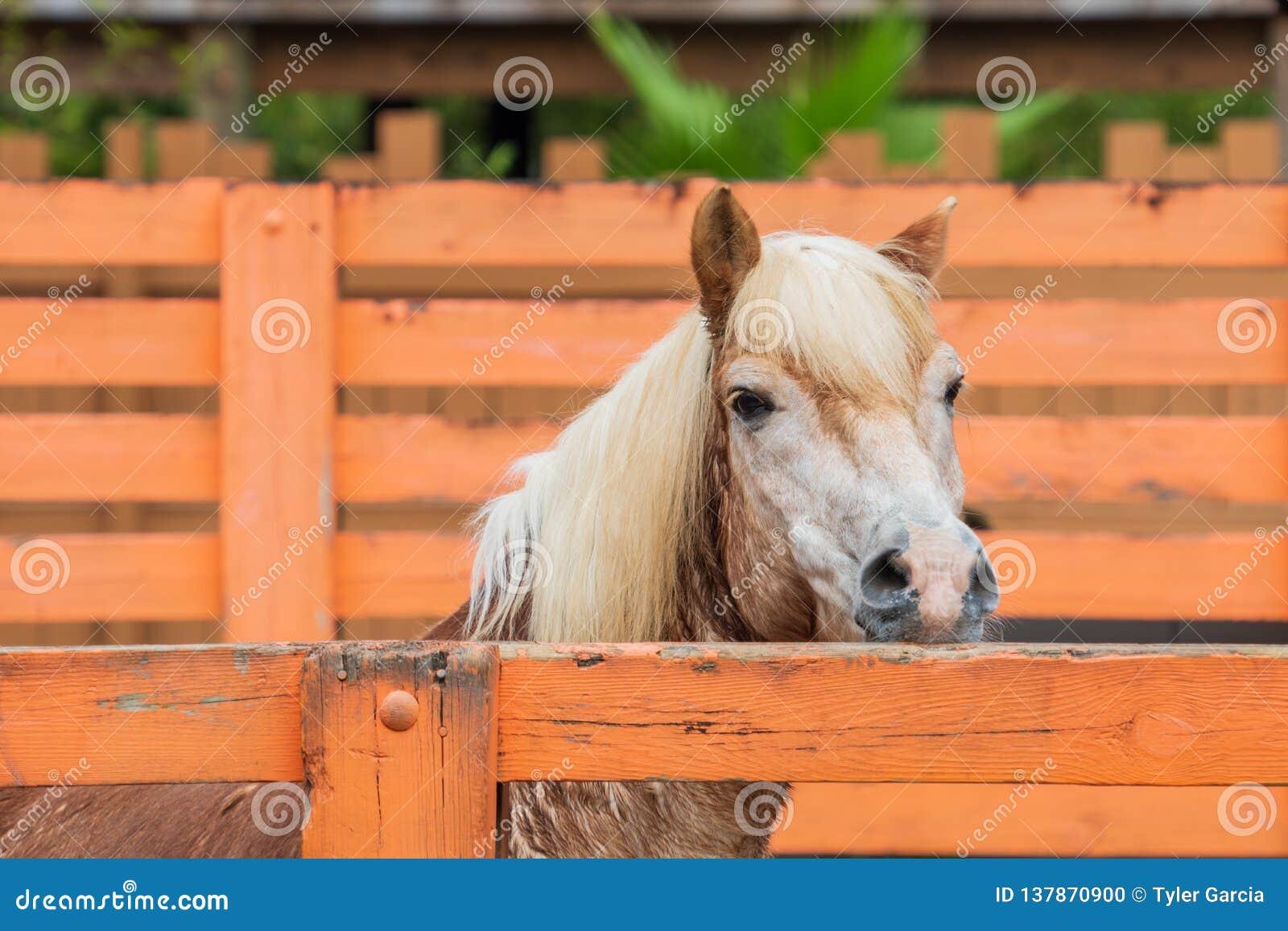 Лошадь рассматривая загородка