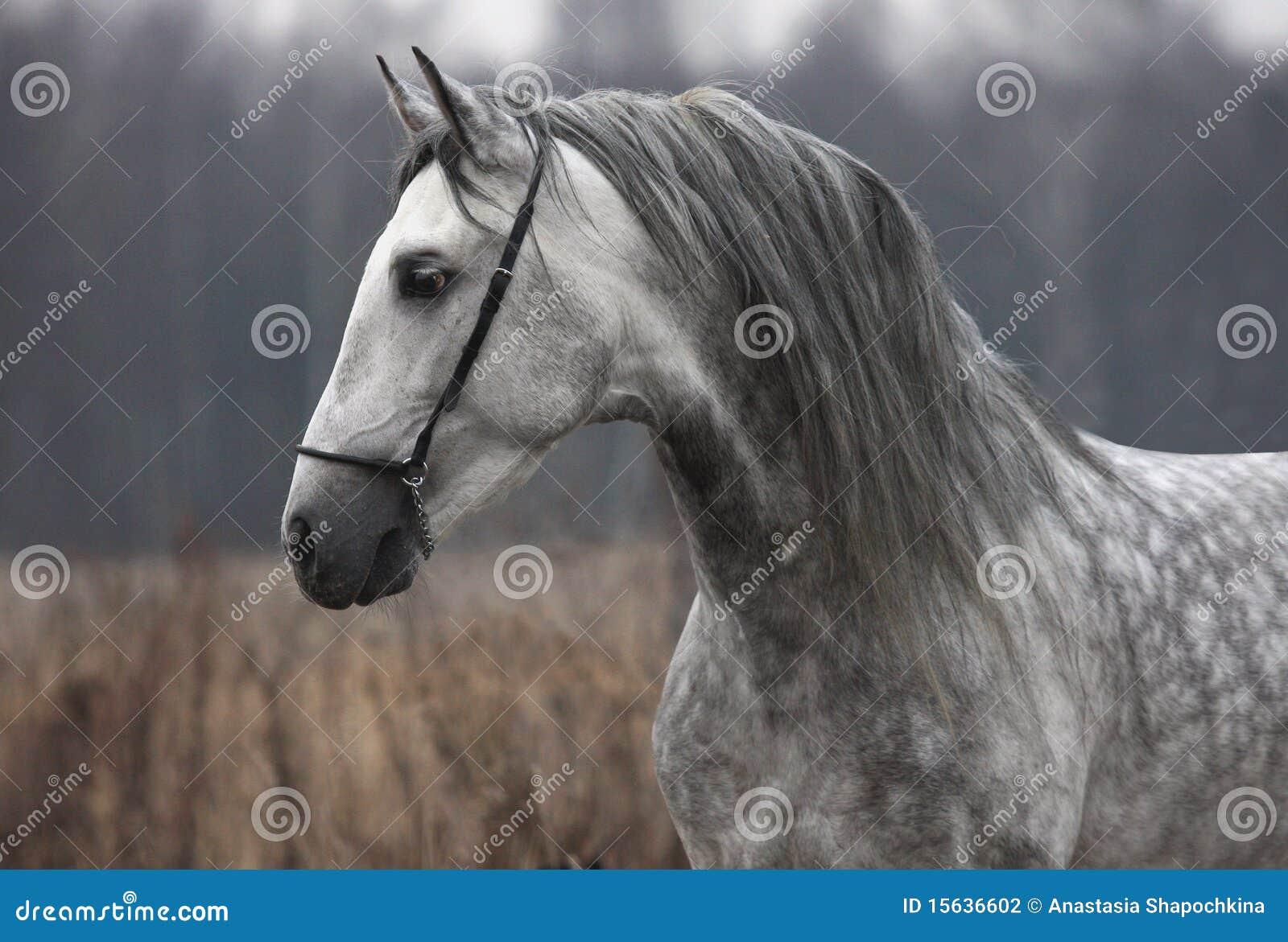 лошадь серого цвета осени