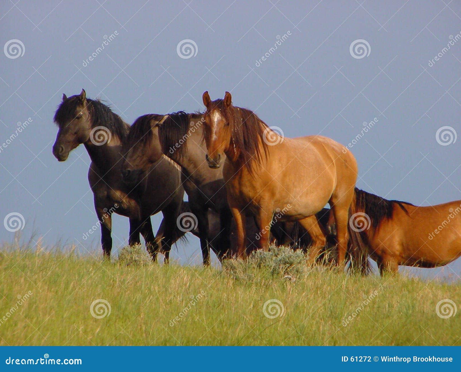 лошадь табуна