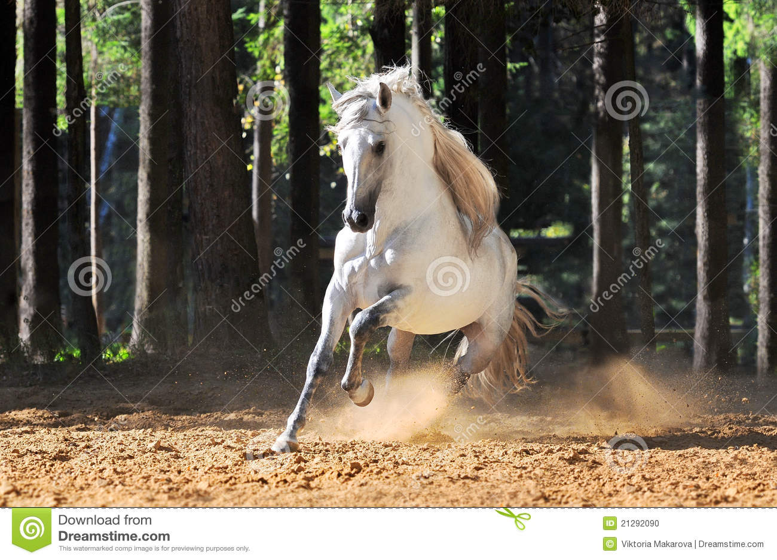 лошадь gallop бежит белизна песка