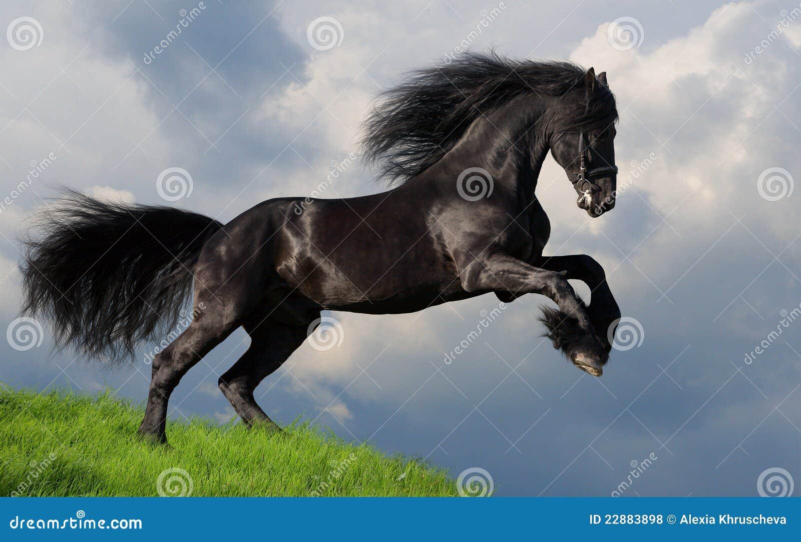 лошадь gallop friesian