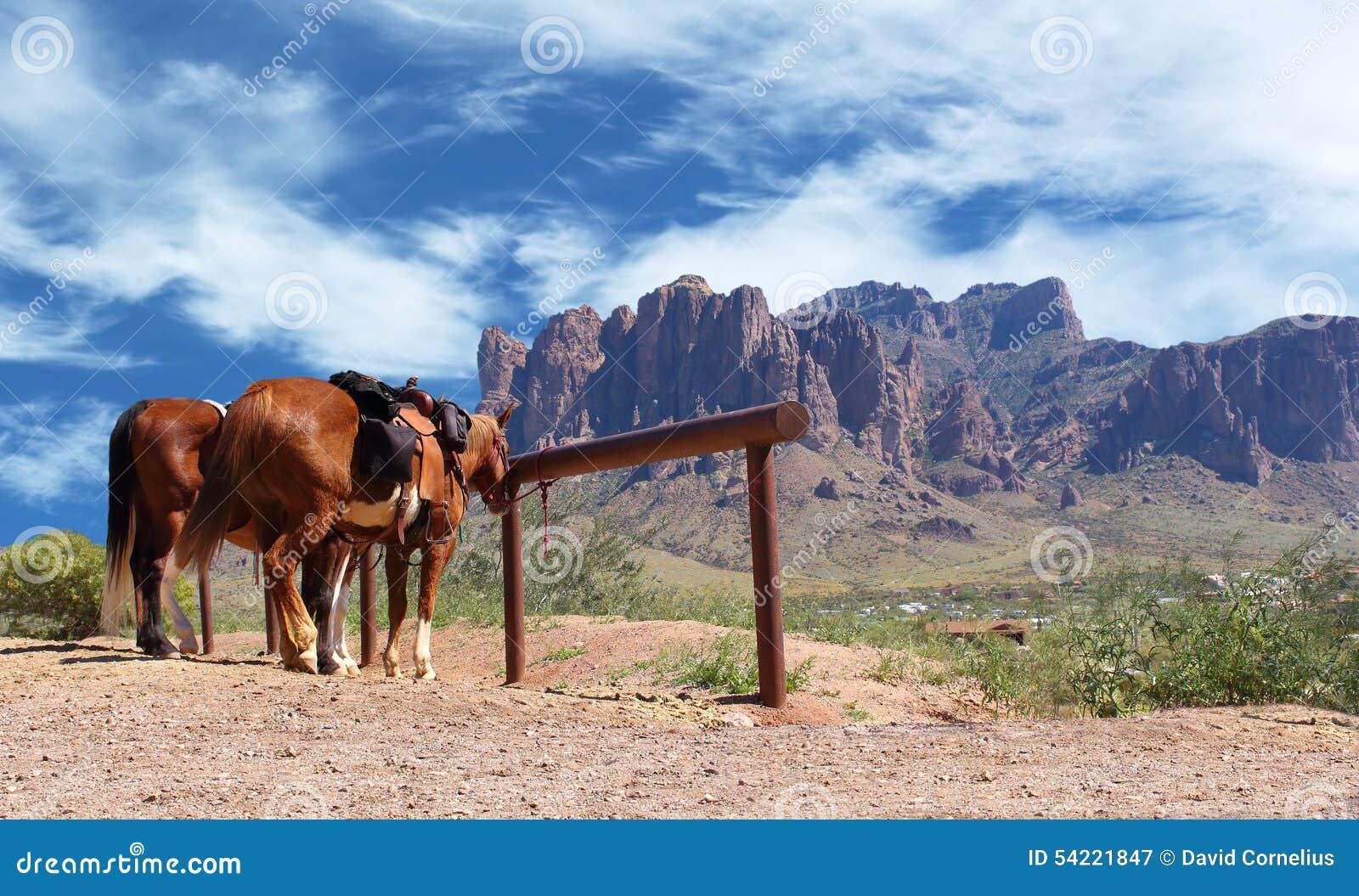 Лошади городка Диких Западов связанные к столбу