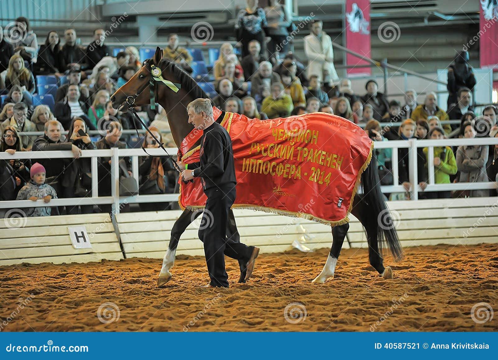 Лошади породы выставки