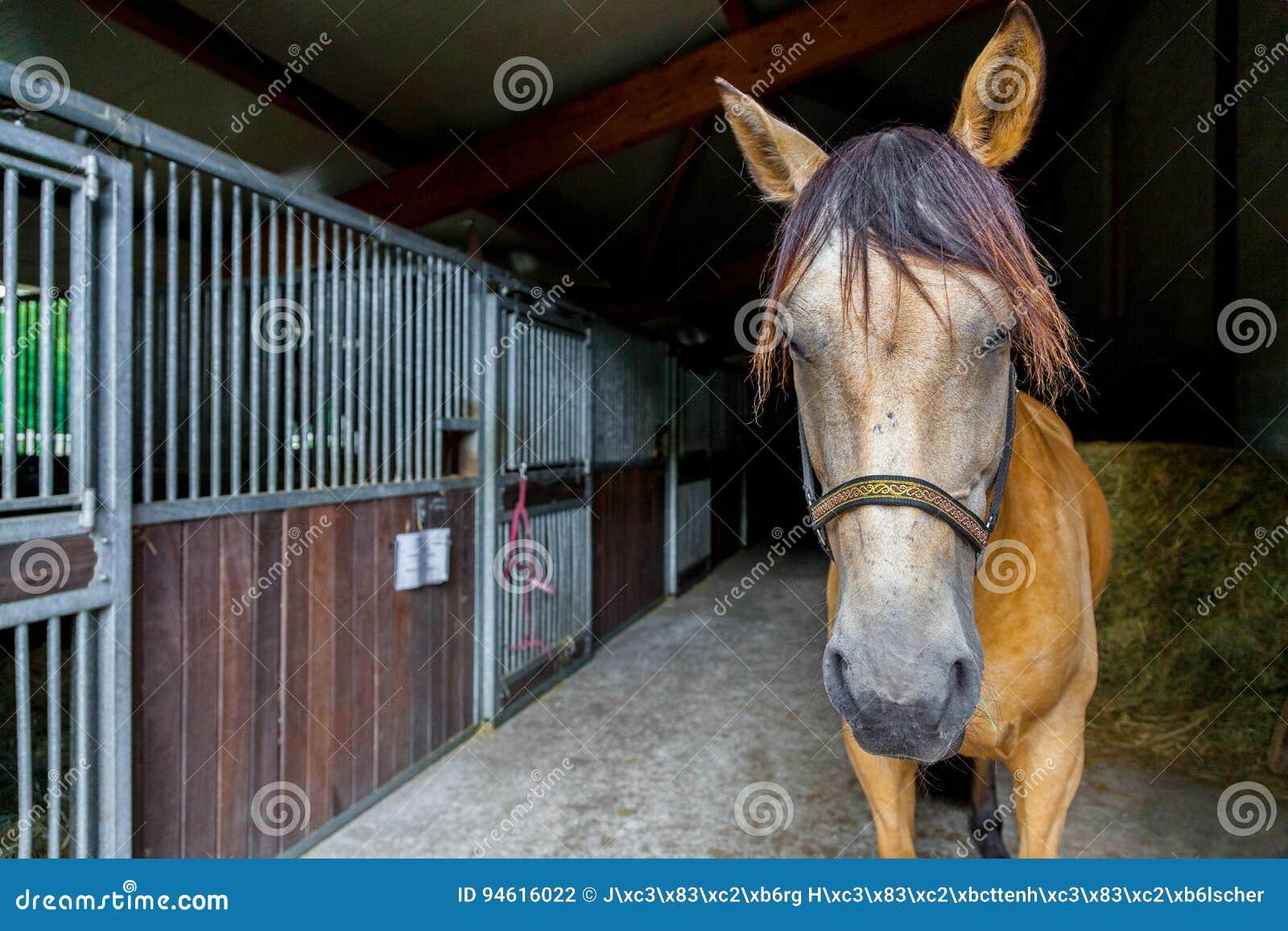 Лошадь Брайна стоит в амбаре