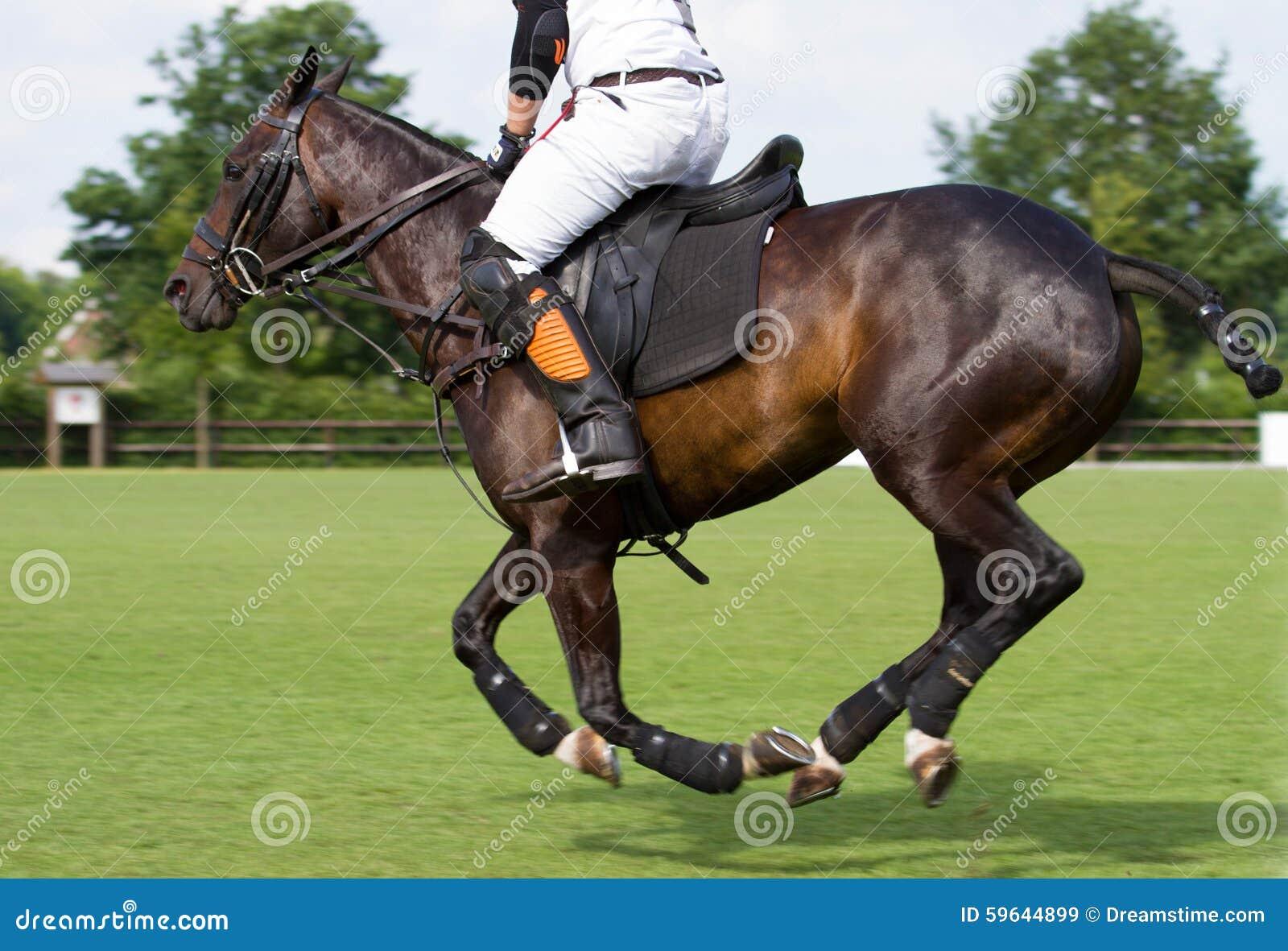 Лошадь в игре поло
