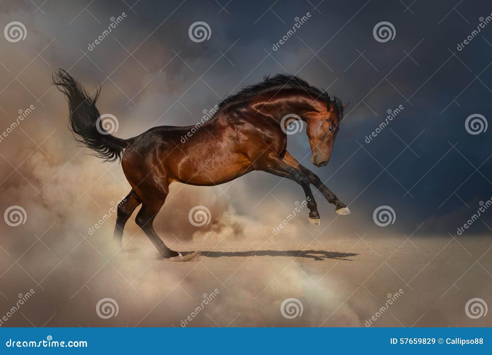 Лошадь залива в пыли