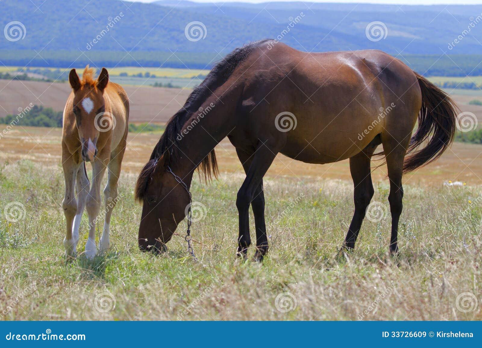 Лошадь и осленок пася в лужке
