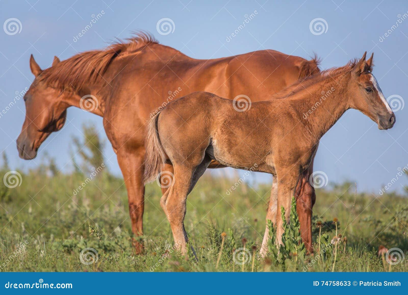 Лошадь и осленок