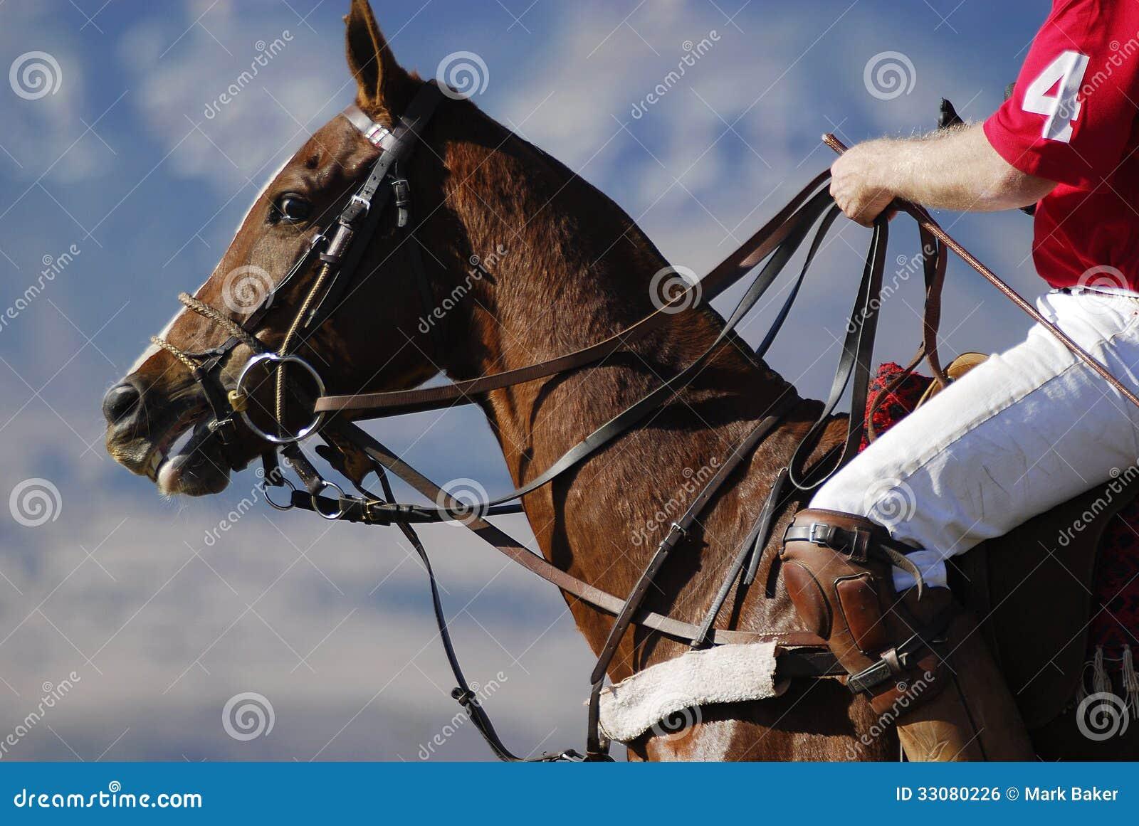 Лошадь поло