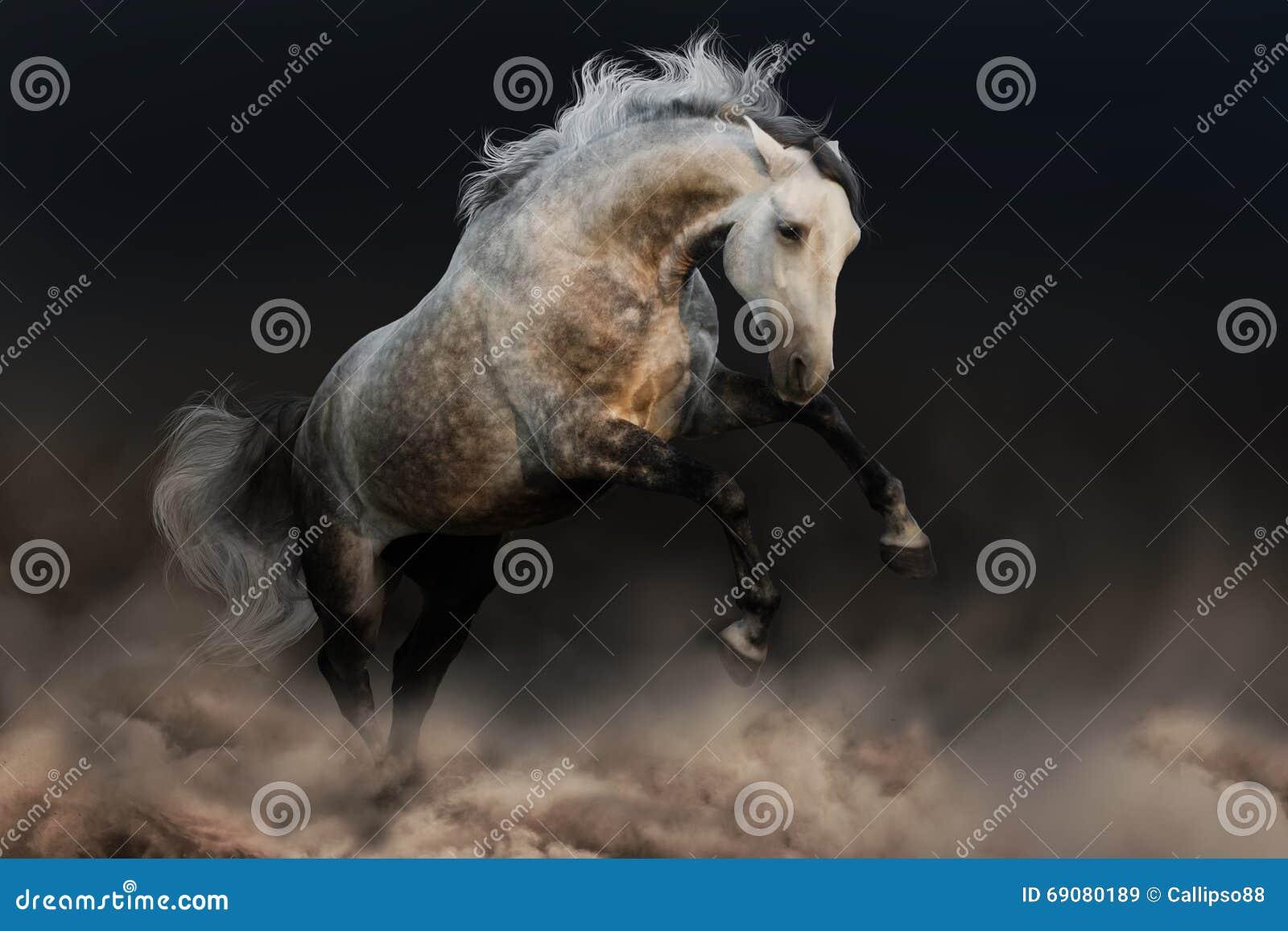 Лошадь с длинной гривой