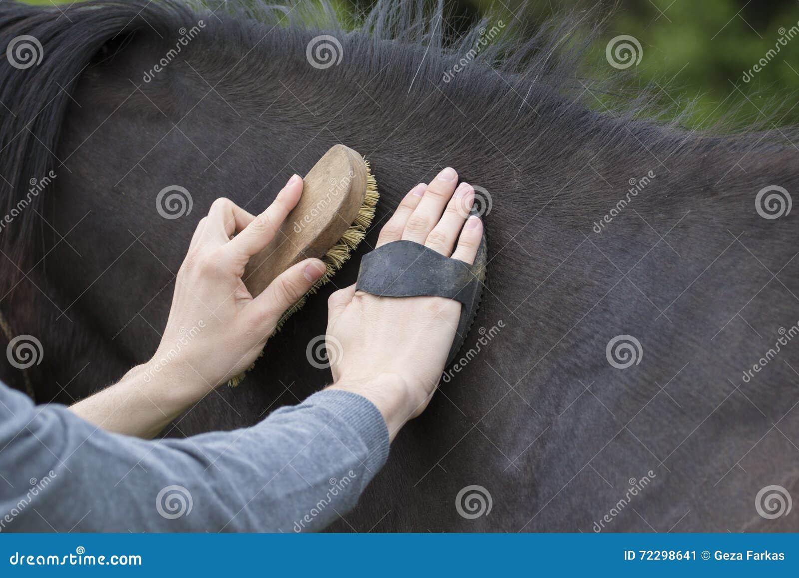 Download Лошадь холить мальчика стоковое изображение. изображение насчитывающей чистка - 72298641