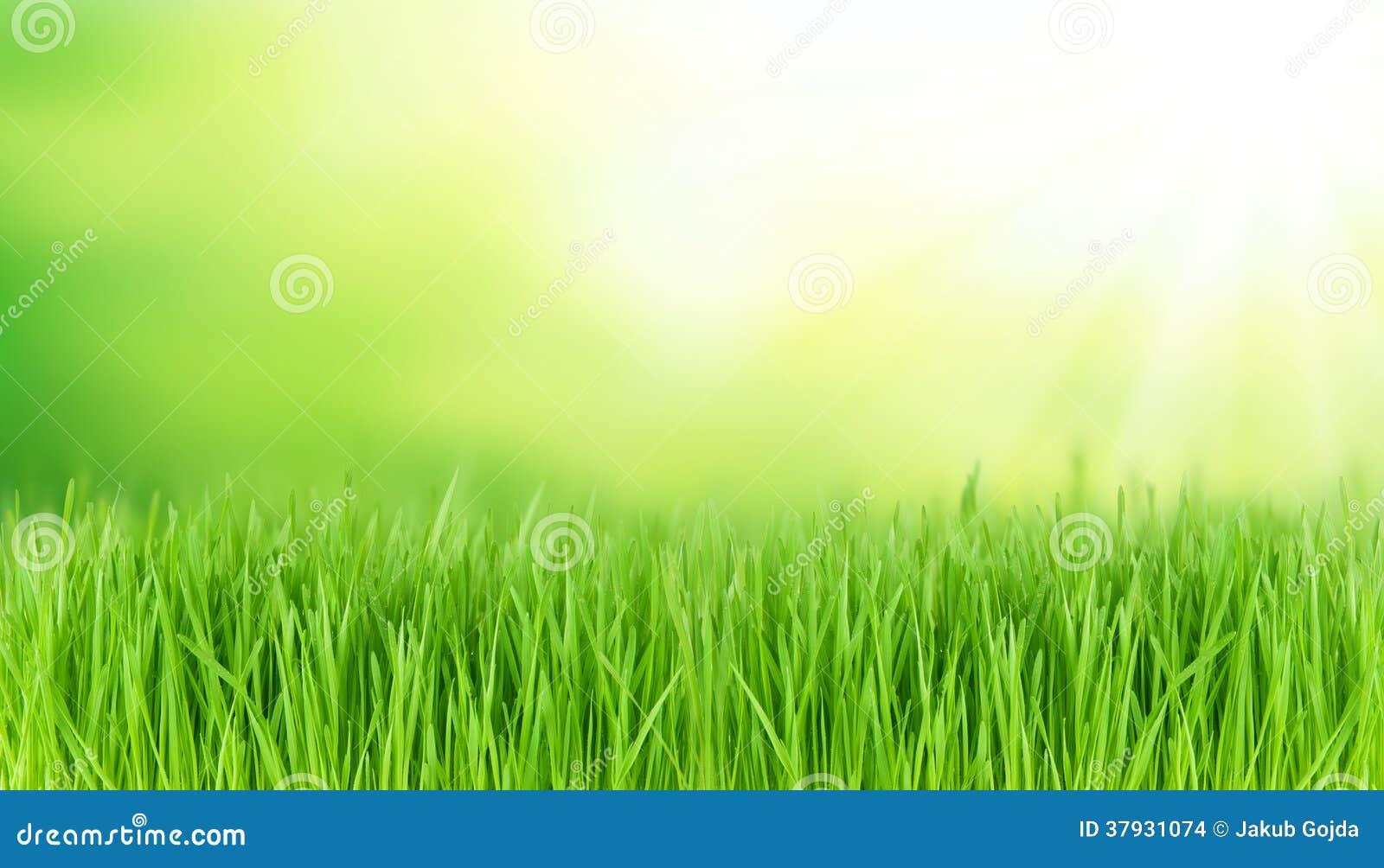 Луг весны
