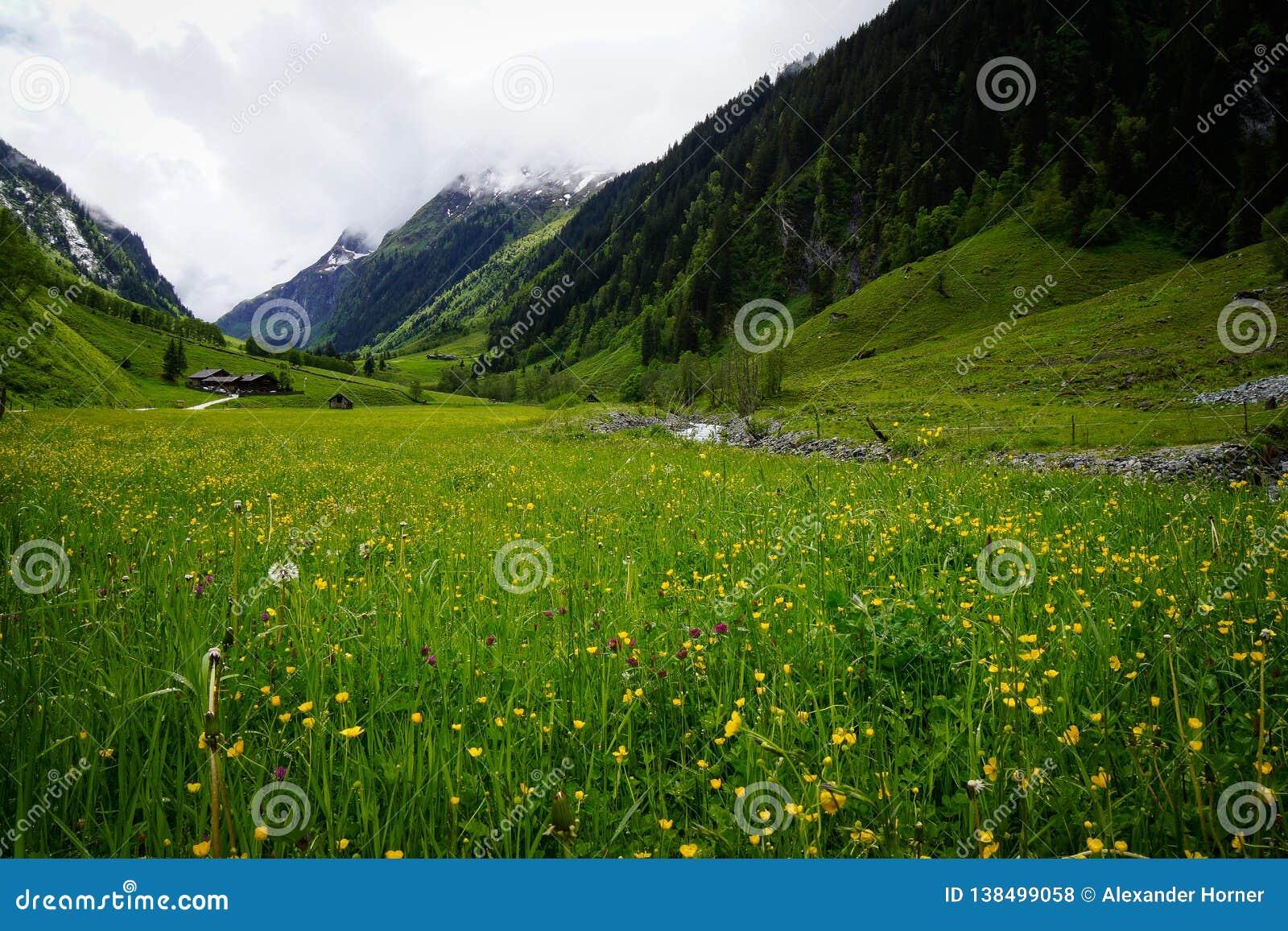 Луг в горных вершинах перед горой
