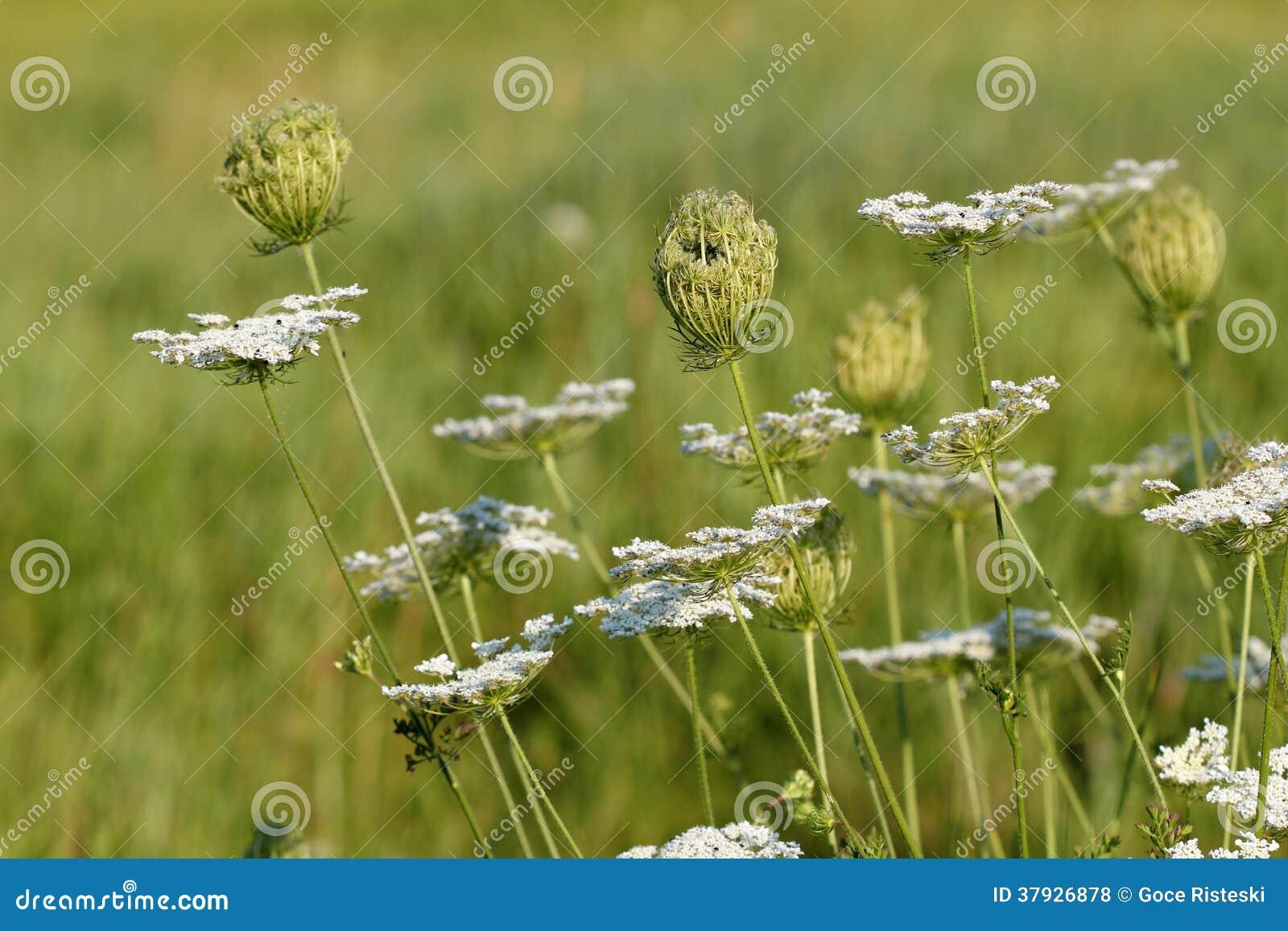 Луг полевых цветков