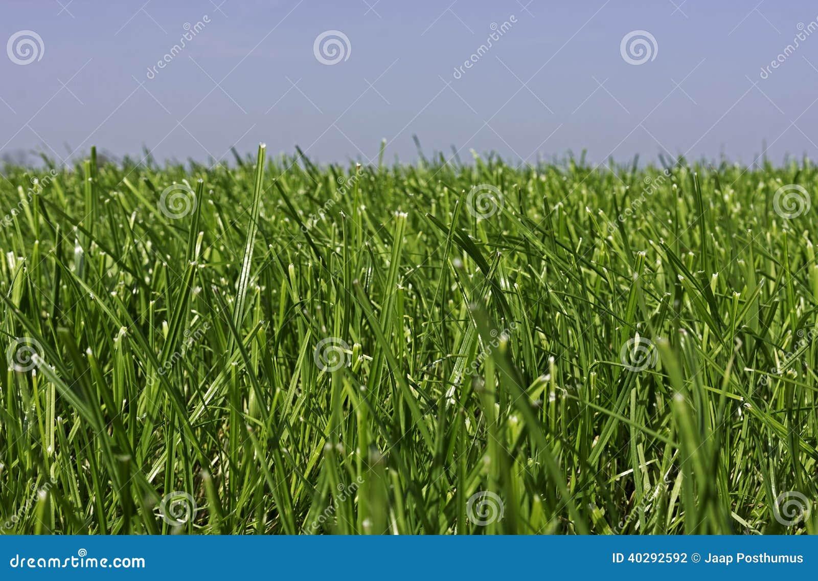 Луг при молодая трава растя для второго отрезка