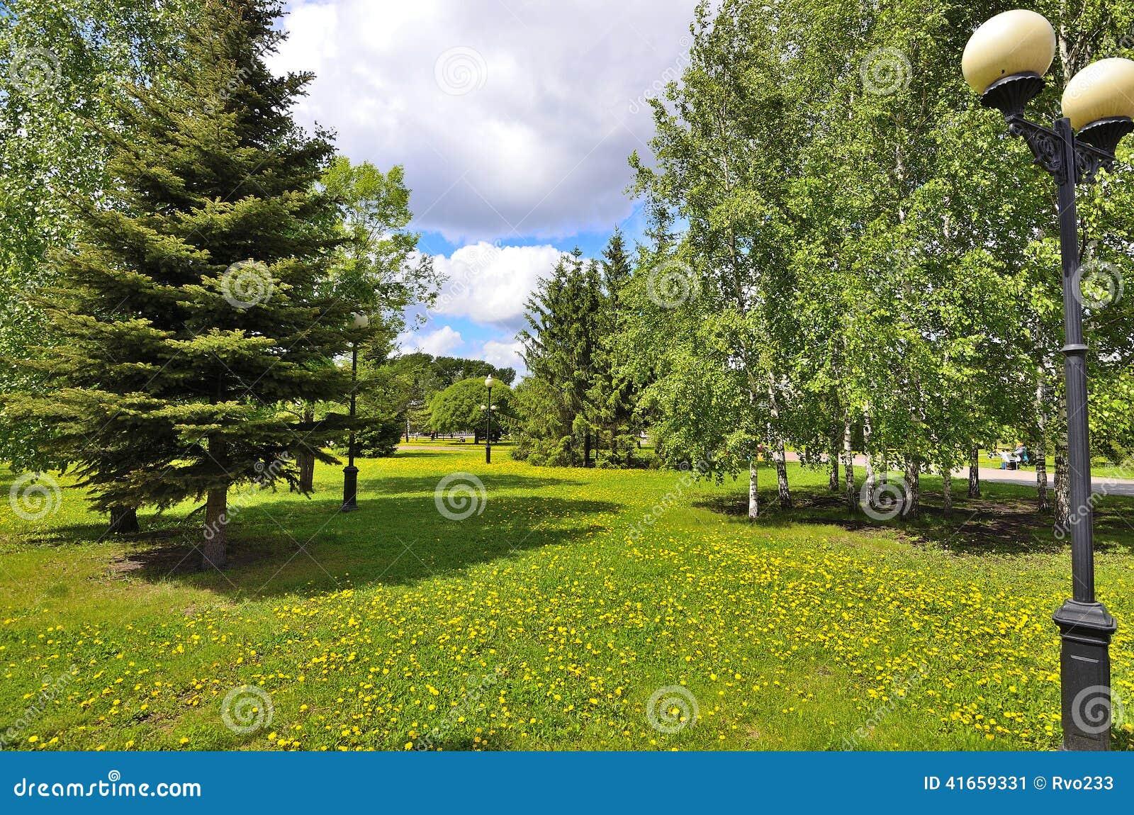 Лужайка взгляда парка города с одуванчиками