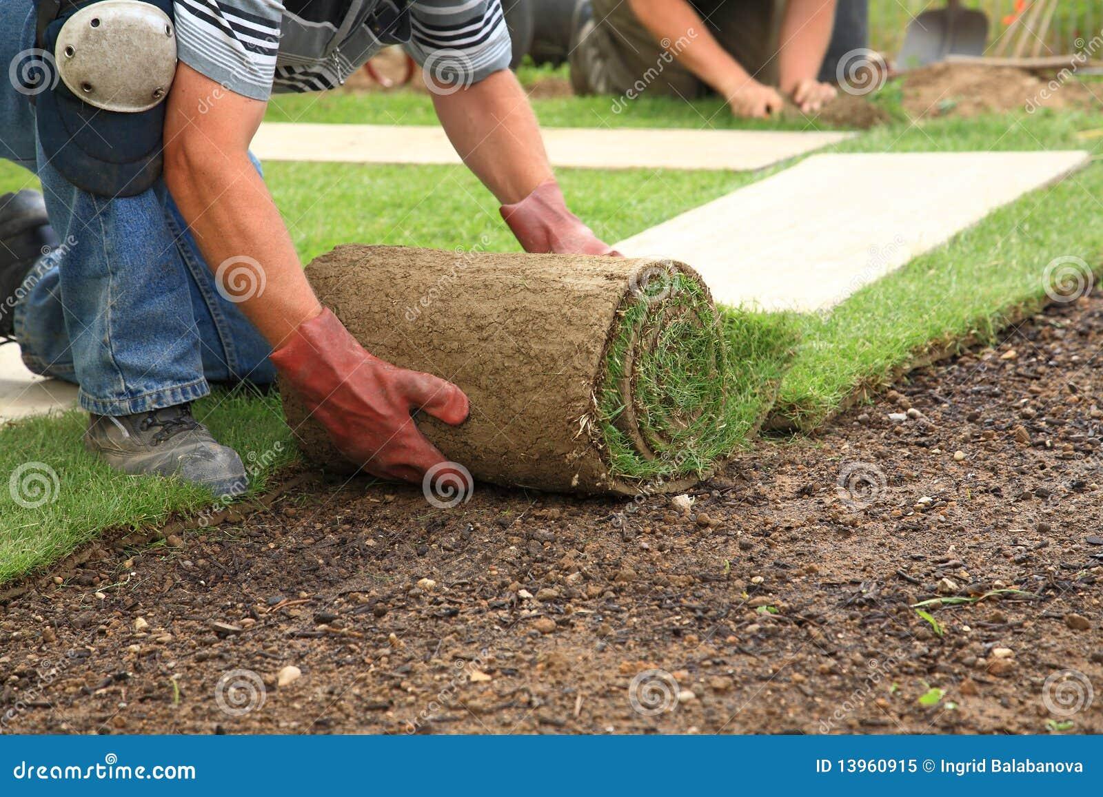 лужайка кладя новый sod