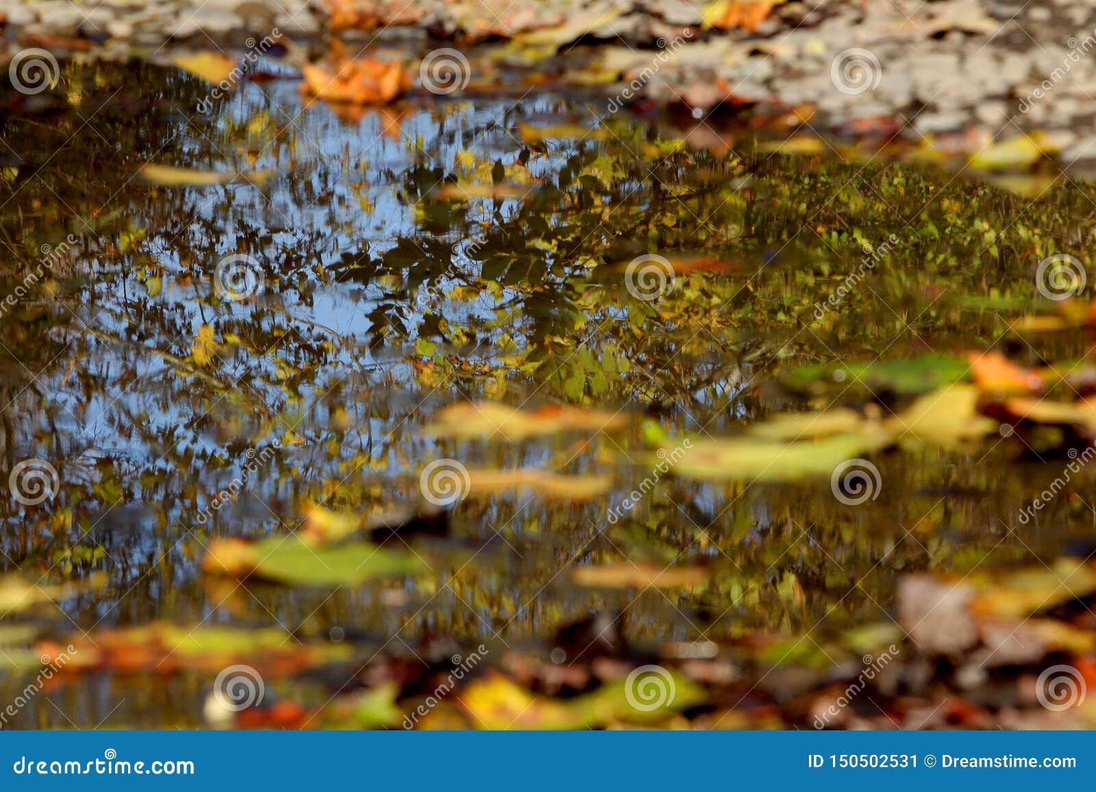 Лужица осени с отражением окружая листвы