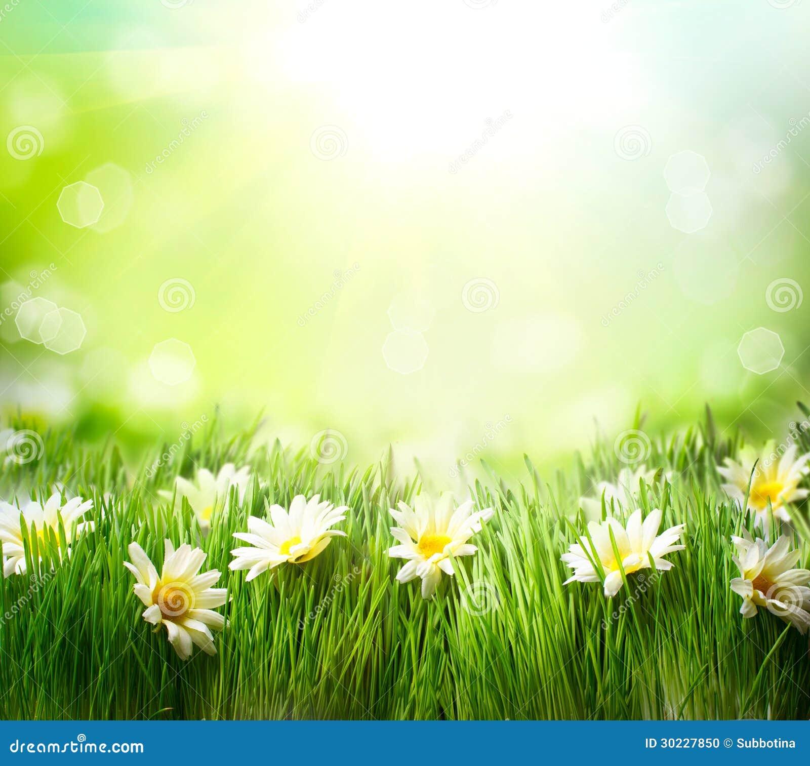 Лужок весны с маргаритками