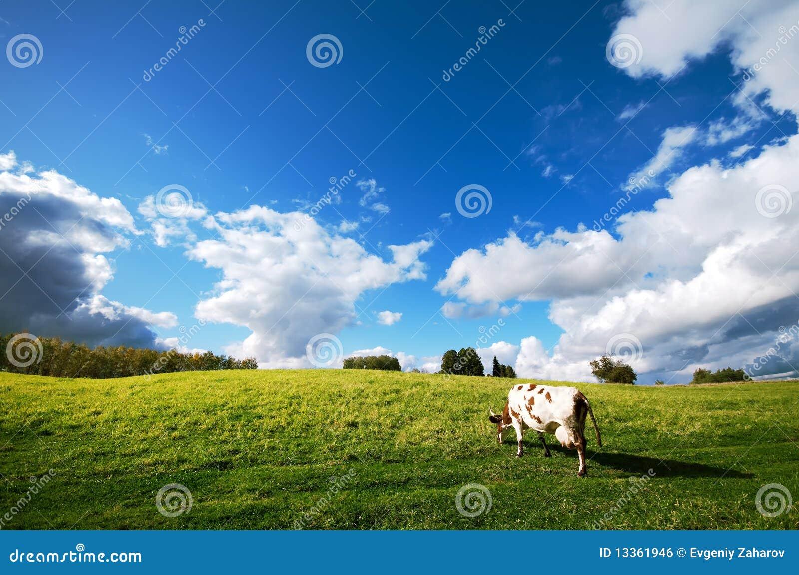 лужок коровы