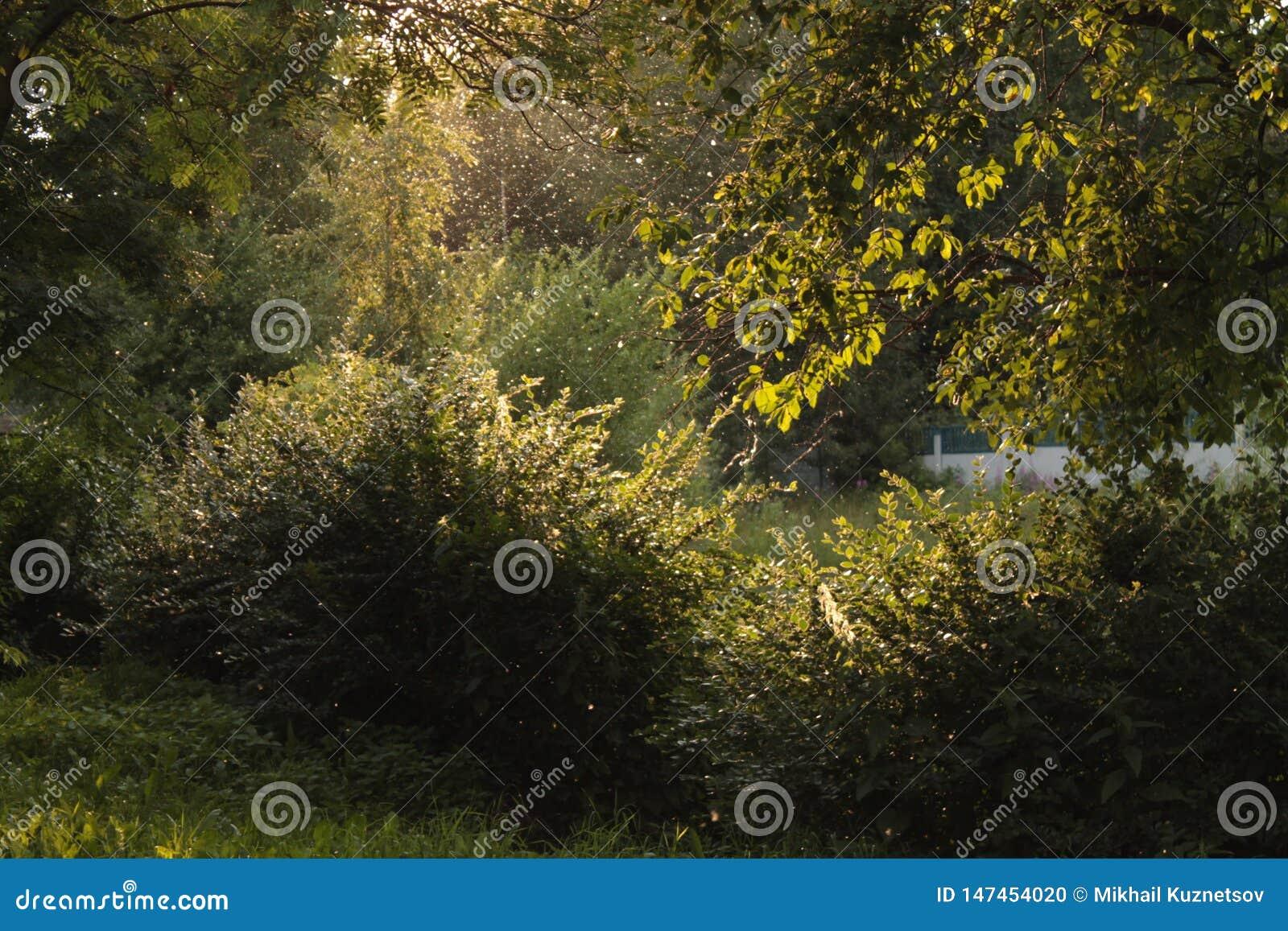 Лучи света за деревьями в парке