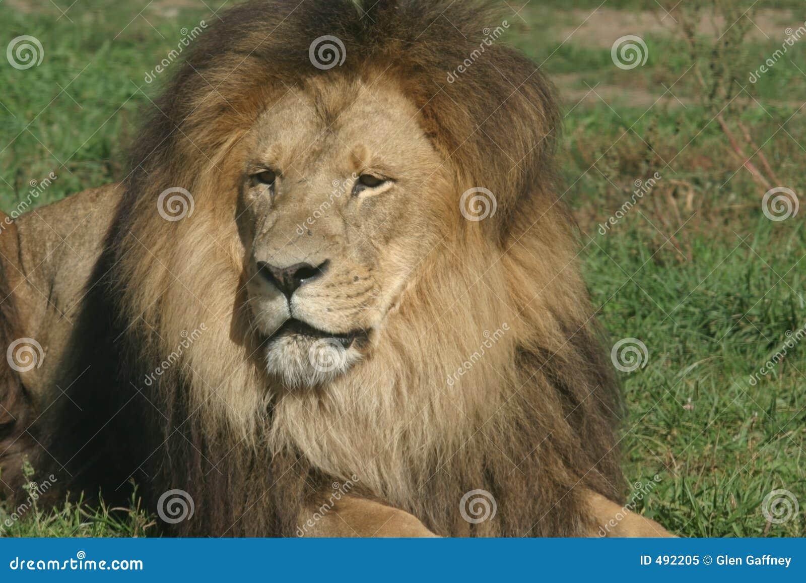 львев короля