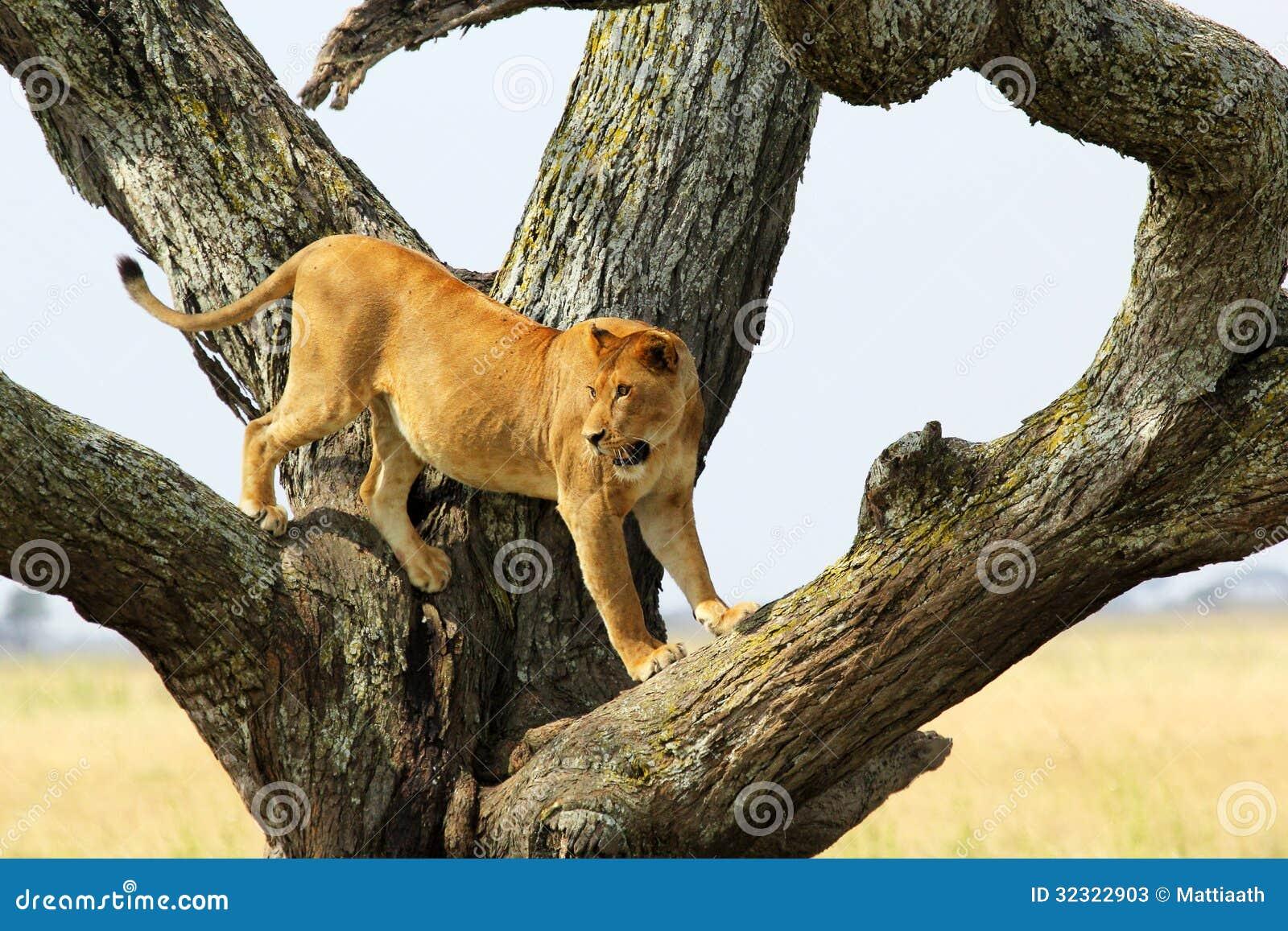 Животное ленивец описание повадки как выглядит где