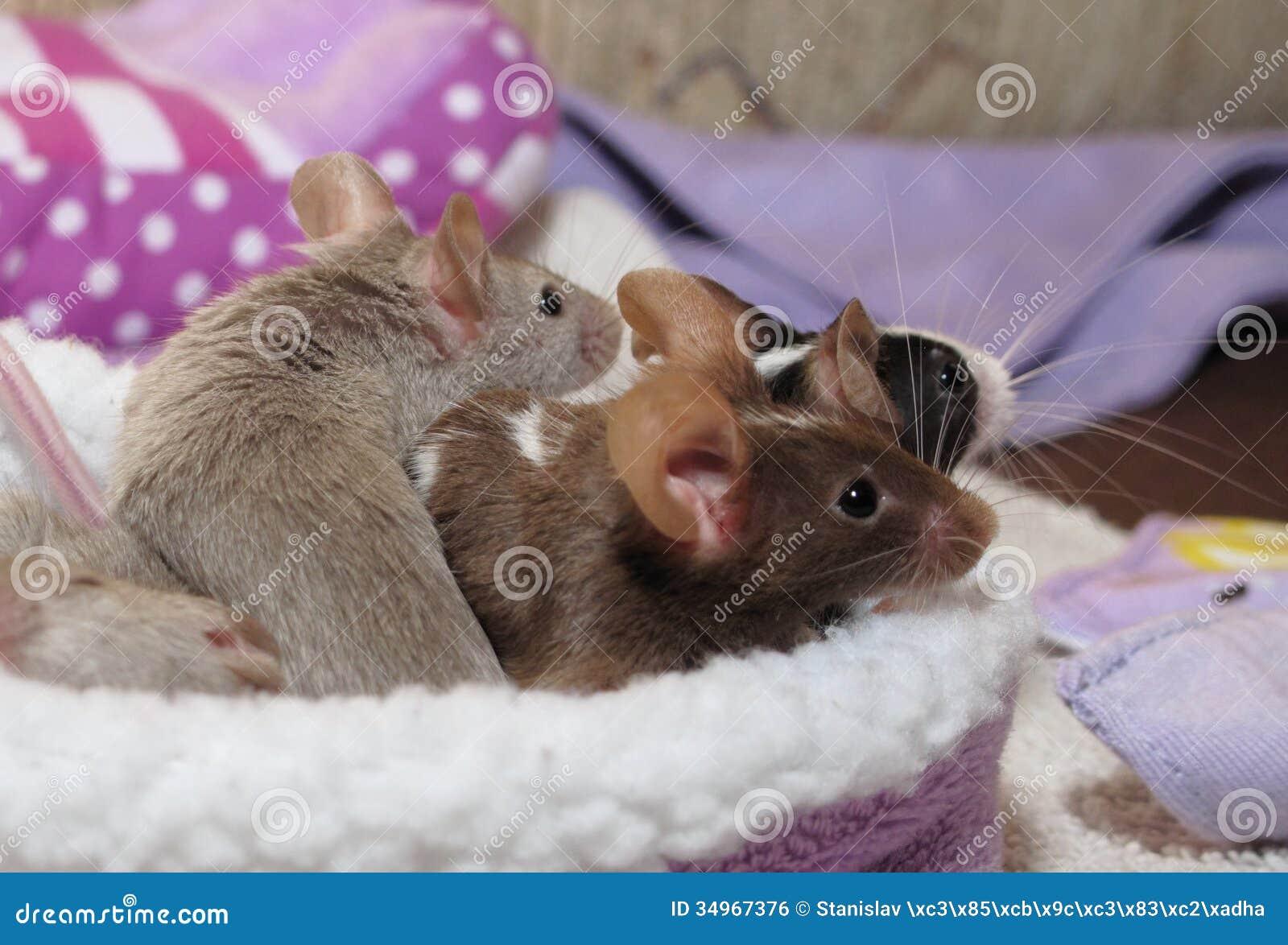 Любимчики - мыши