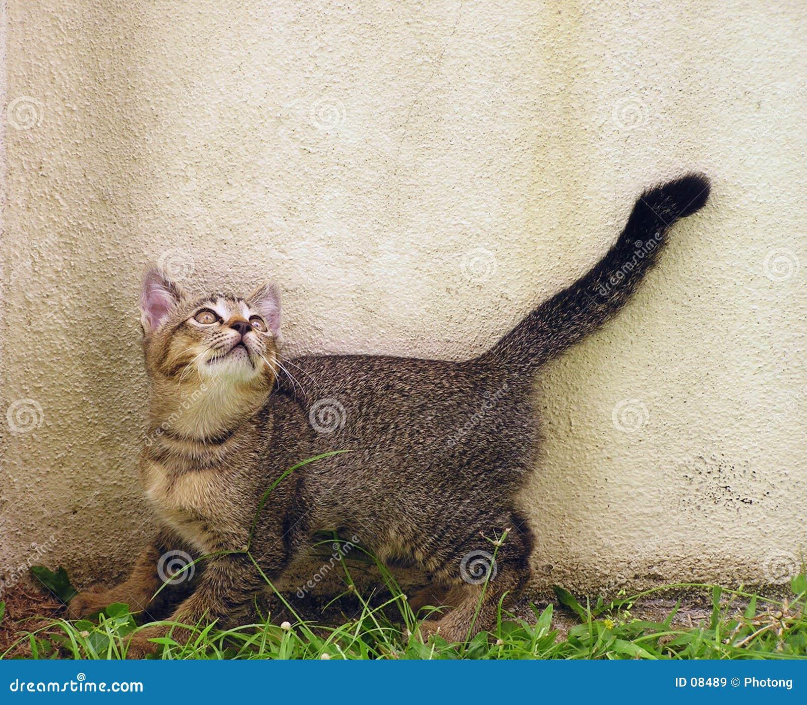 любознательний котенок