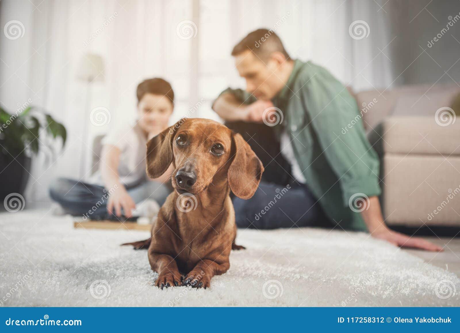 Любознательный коричневый щенок лежа на ковре около предпринимателей