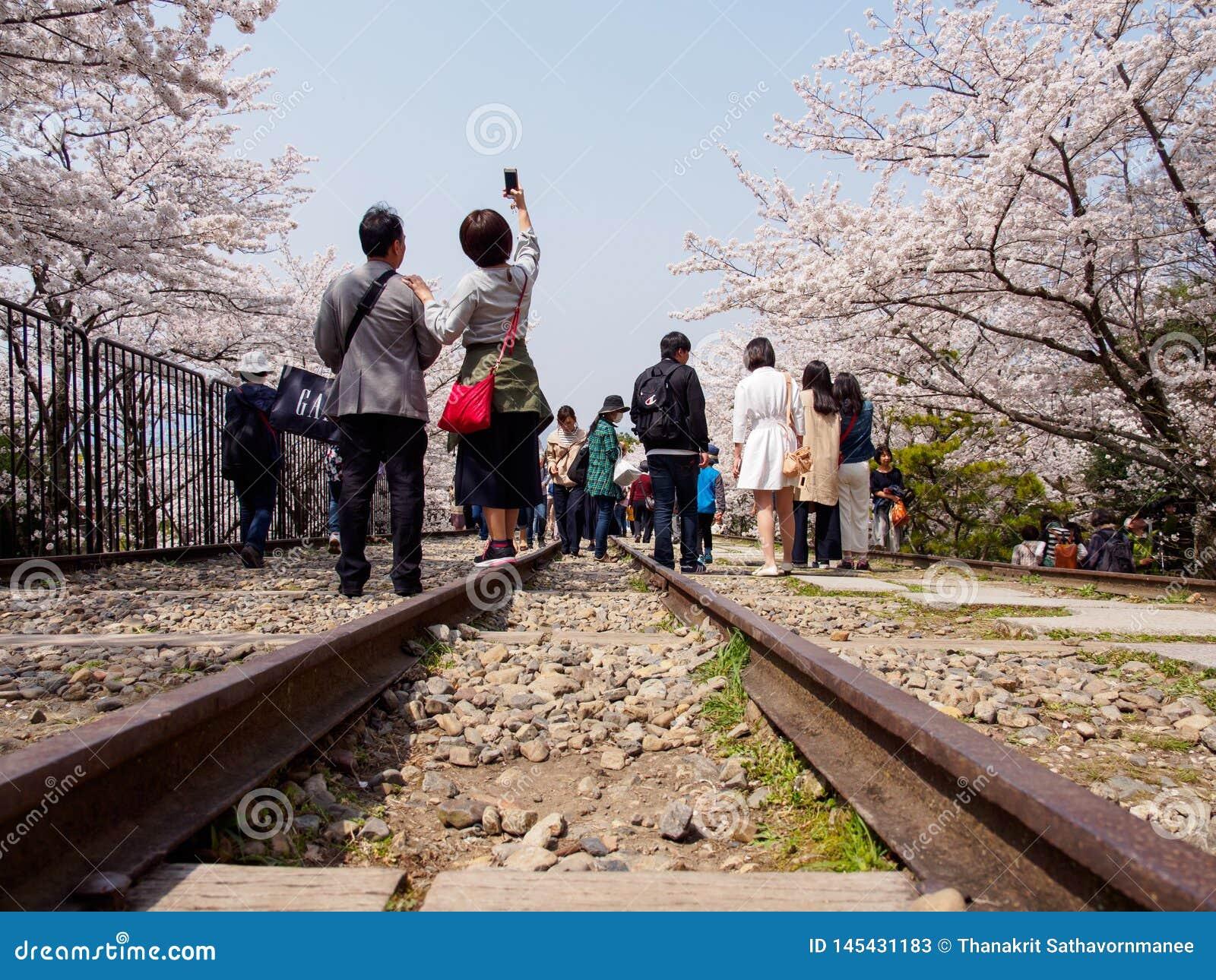 Люди принимают selfies вдоль деревьев Сакуры и железнодорожных путей, уклона Keage, Киото, Японии
