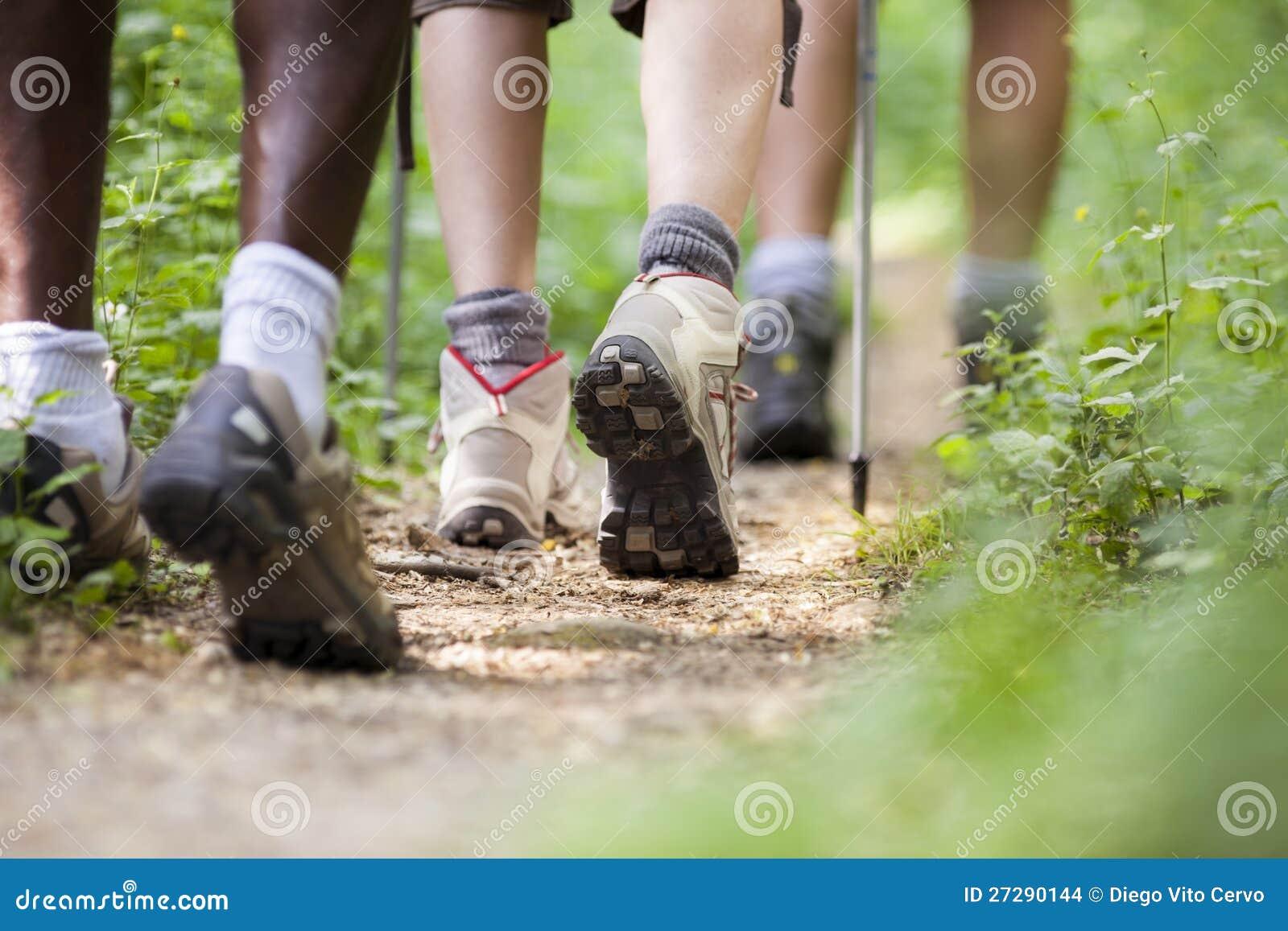 Люди trekking в древесине и гуляя в рядок