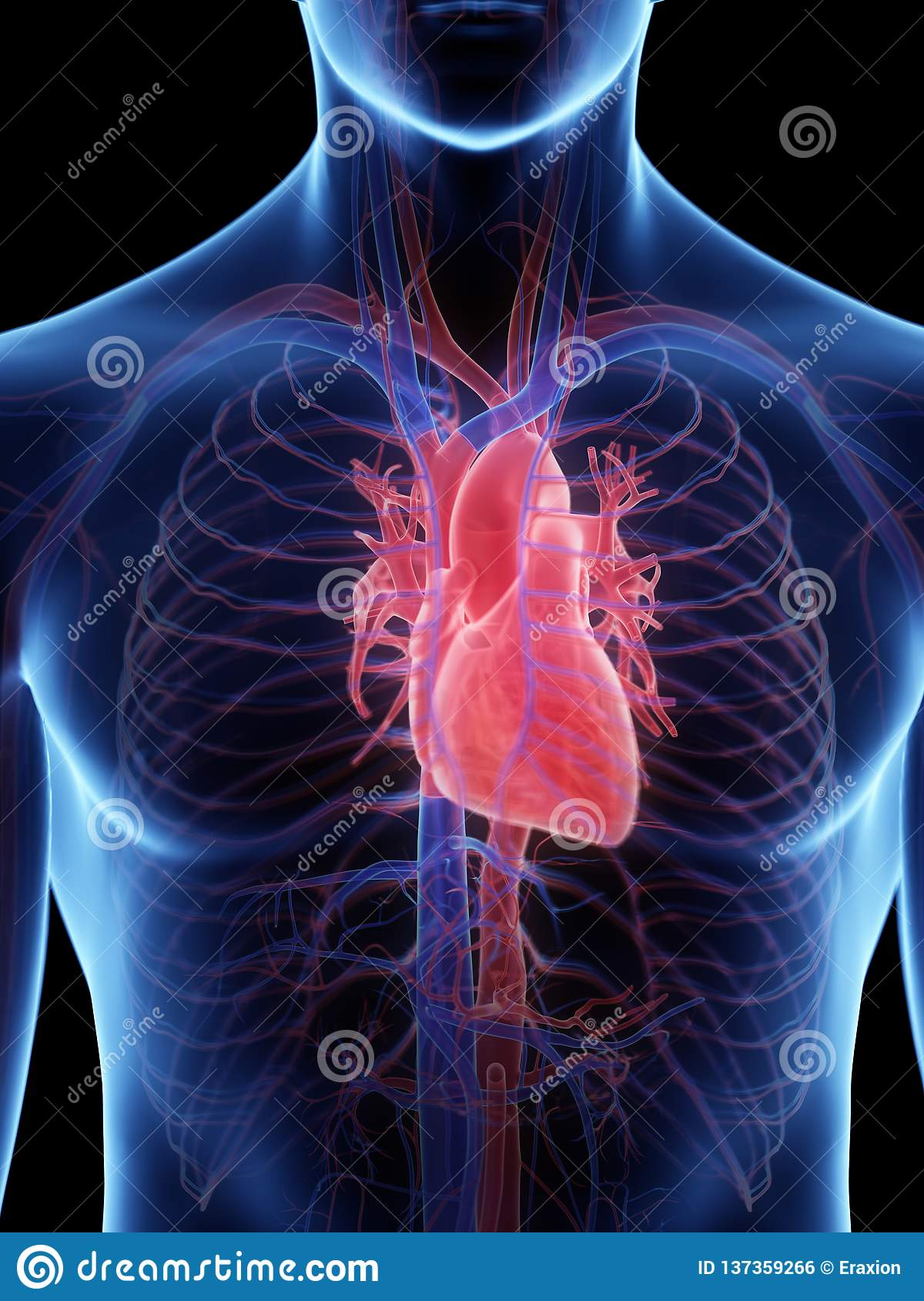 Людское сердце