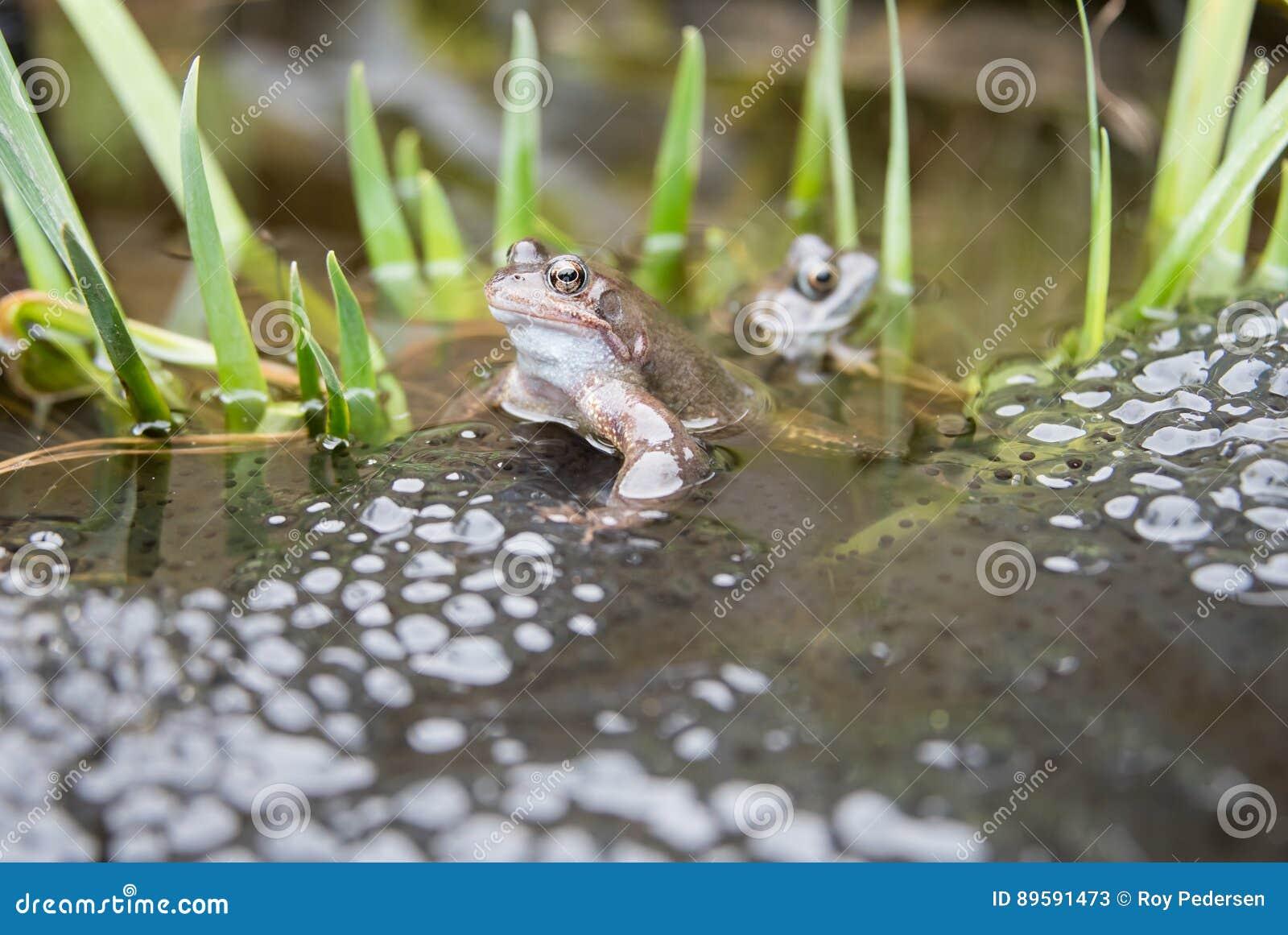 Лягушки и Frogspawn